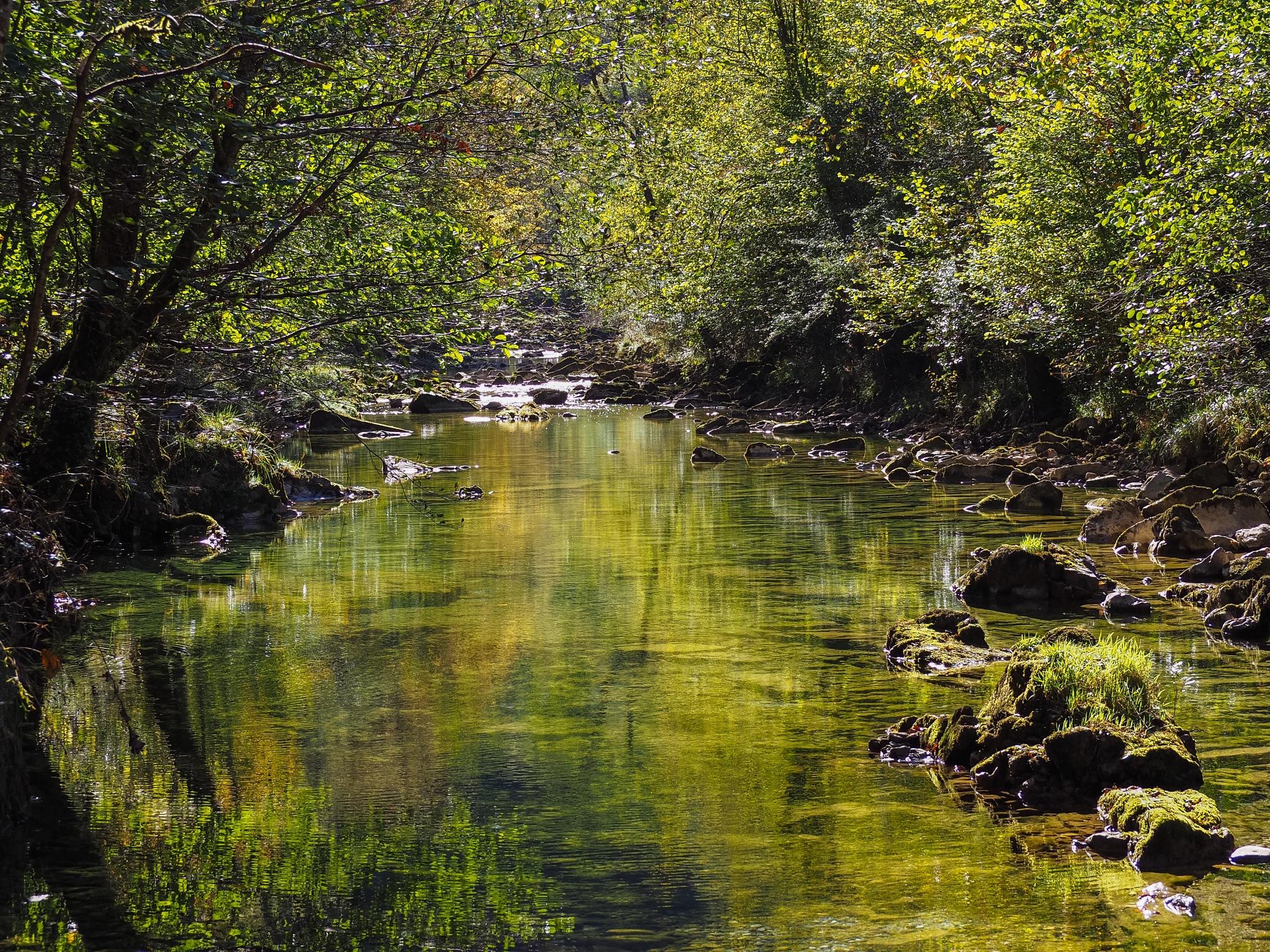 Dobra river  by javituero