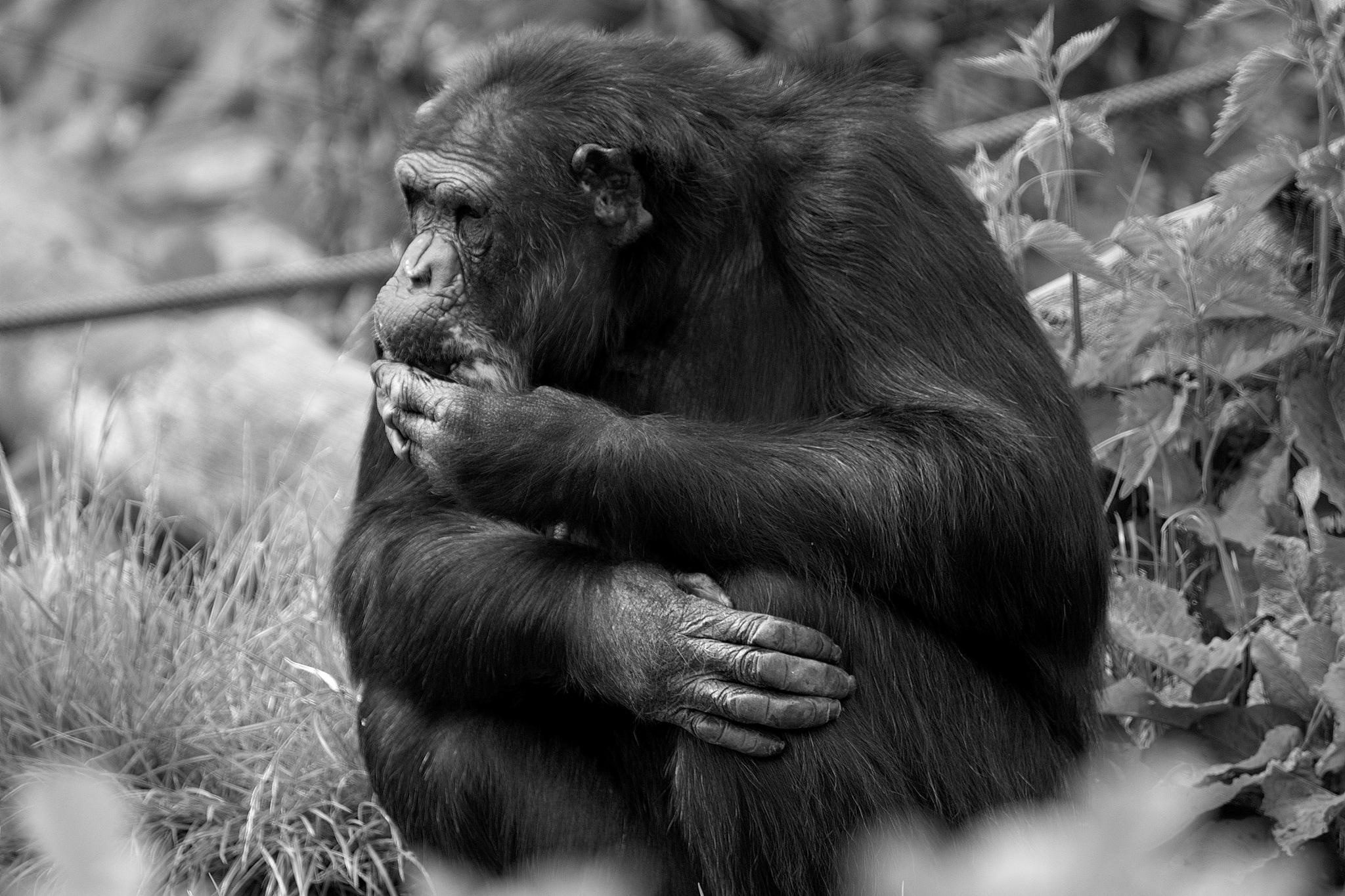 Zoo 2 by Mogens
