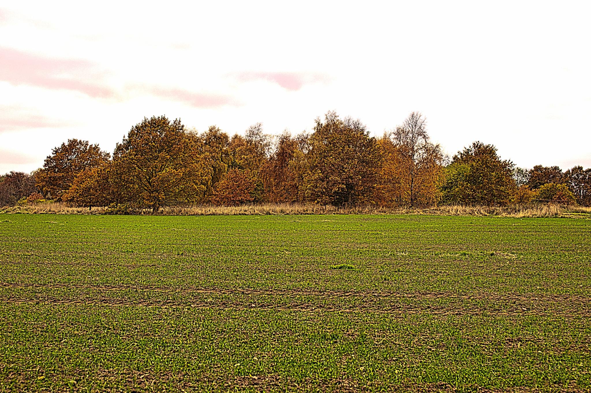 Autumn on Bornholm 5 by Mogens