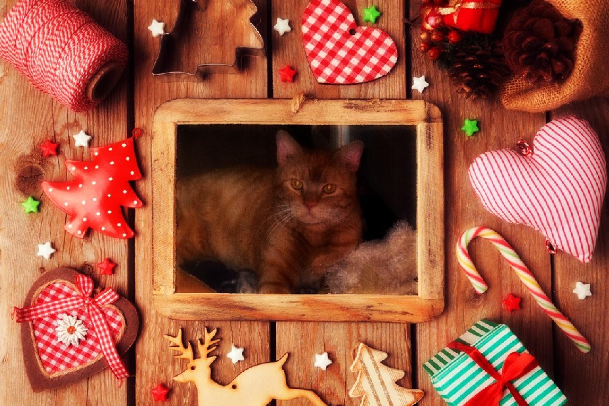 Cookie Cutter Christmas by Jen Sulser