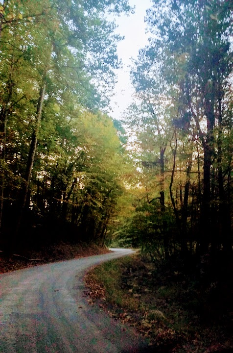 Long and Winding Road by Pam Jenkins