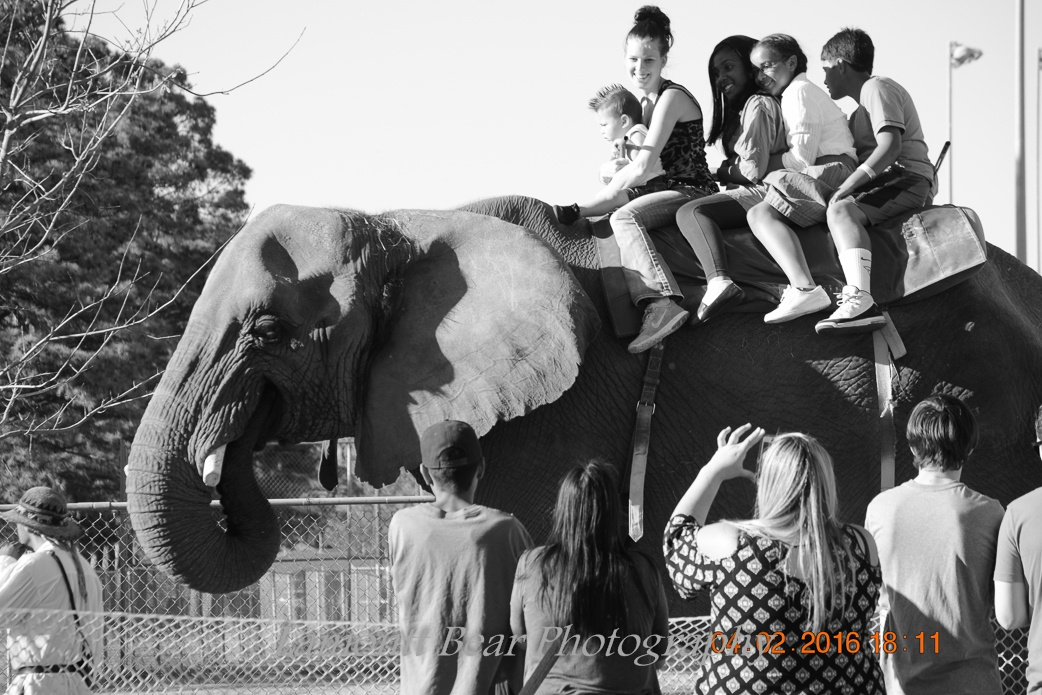 ELEPHANT UP!!!  by roughneck1-9