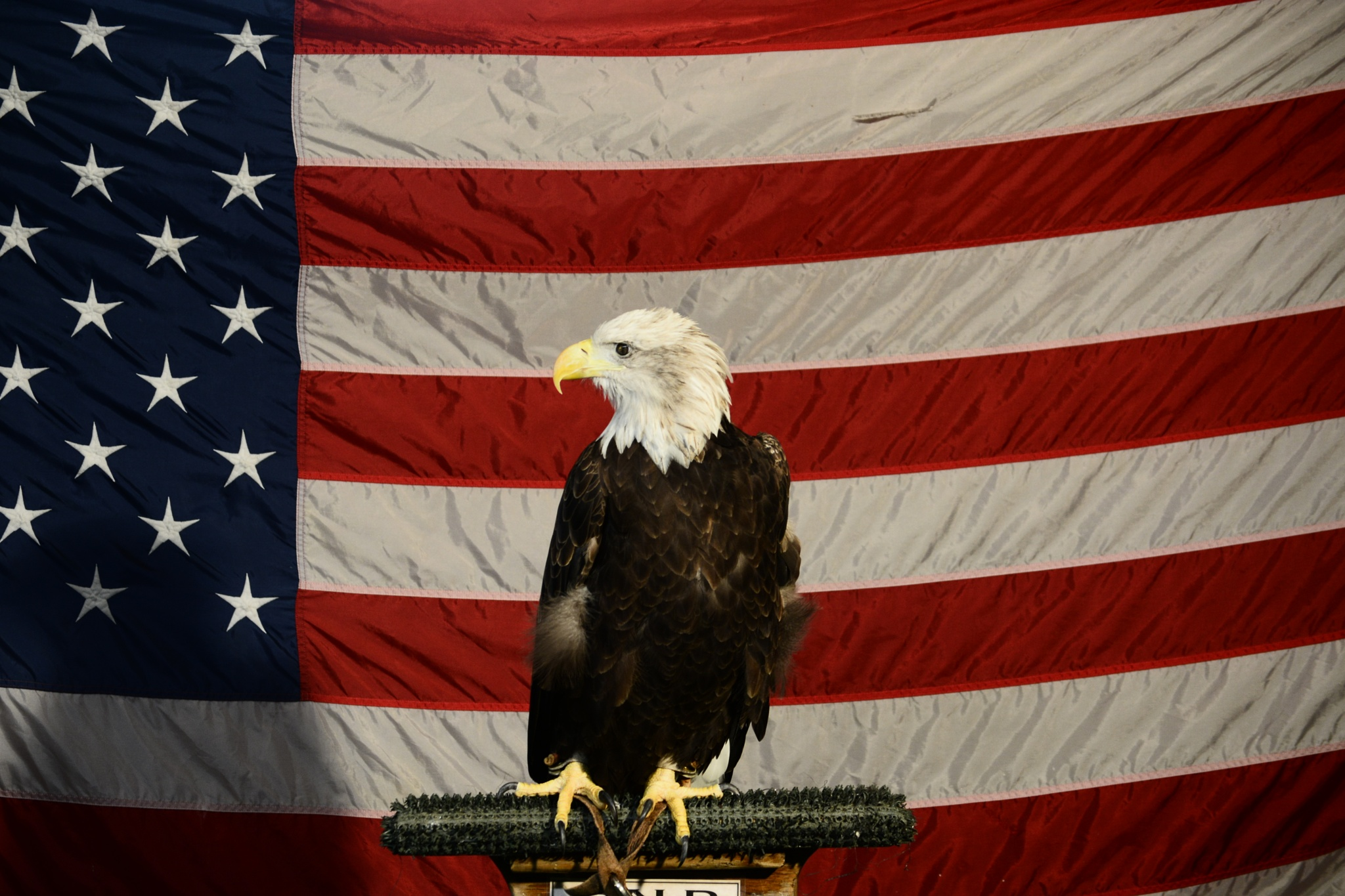 BALD EAGLE..AMERICAN STRONG by roughneck1-9