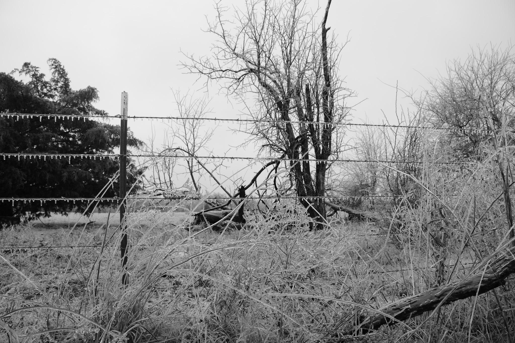 Frozen Wire by roughneck1-9