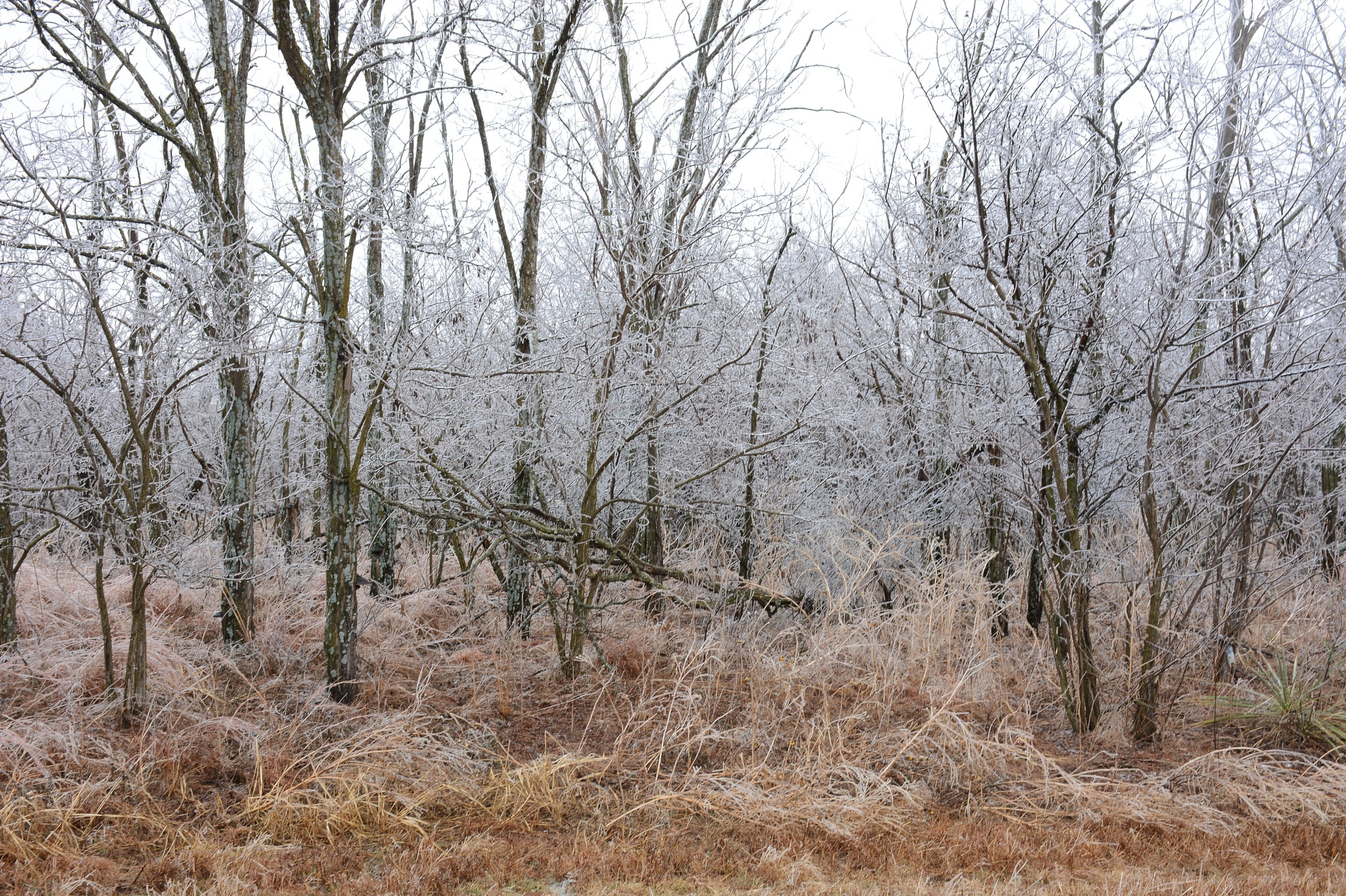 Frozen Trees by roughneck1-9
