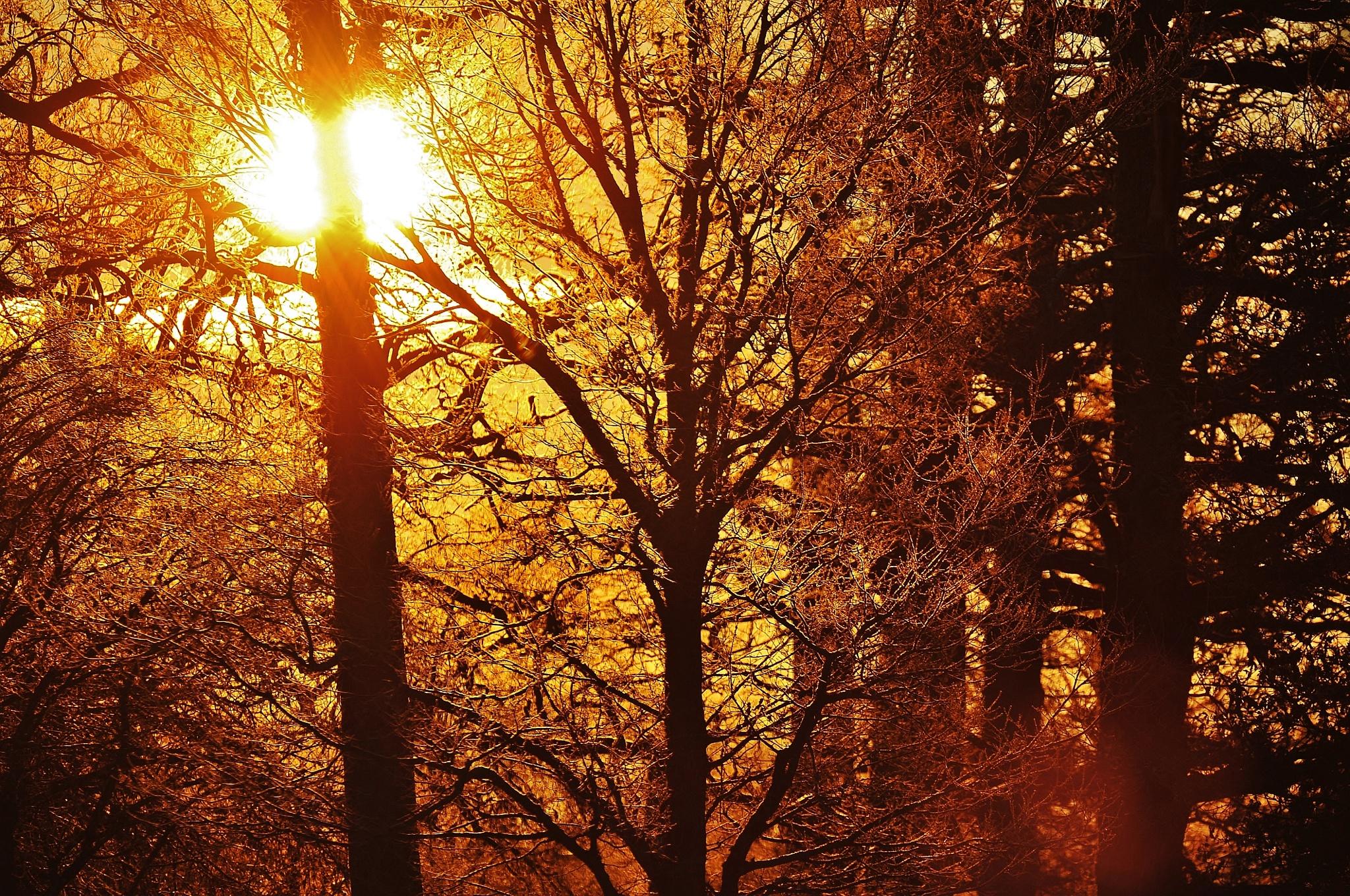 Ljuvlig morgon .  by krillan54