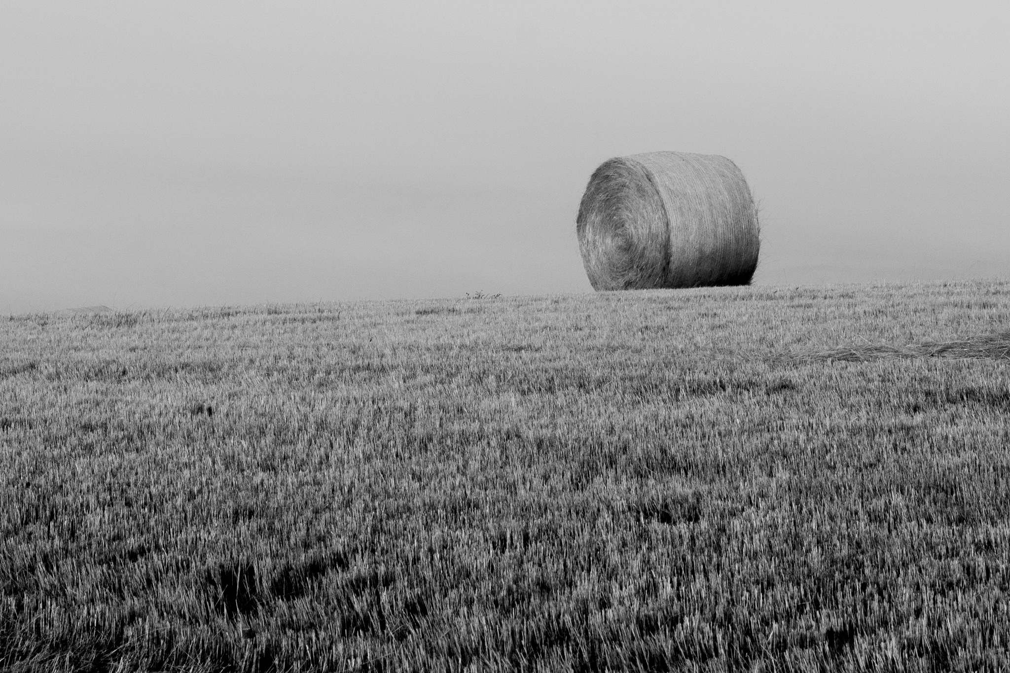 Enrollado / Rolled by Luqal Photo