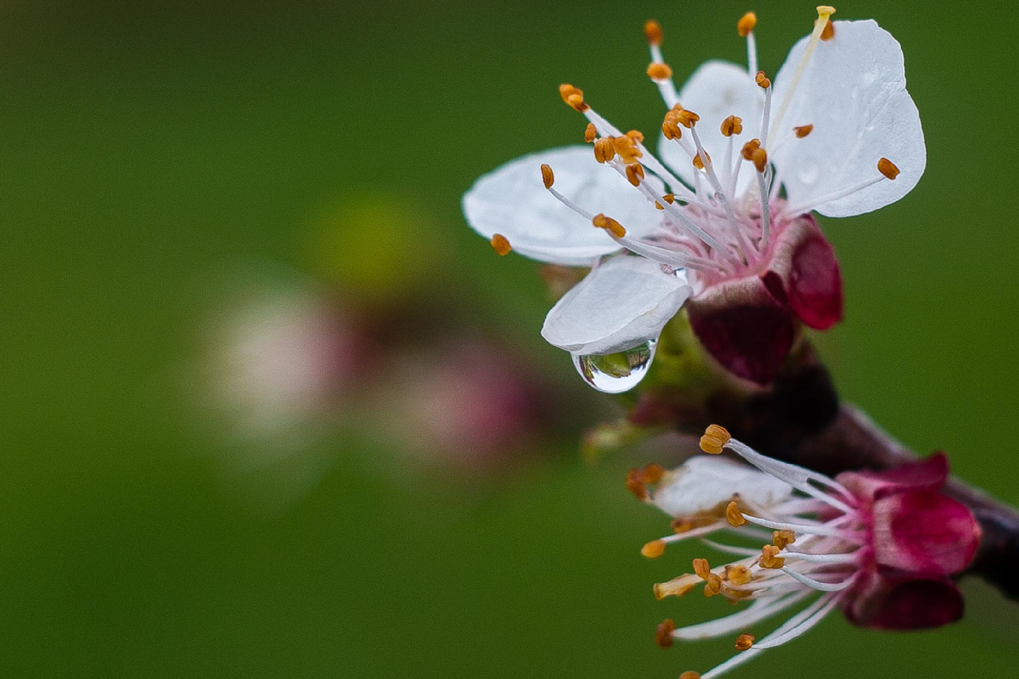 Bloom by Goran Matejin