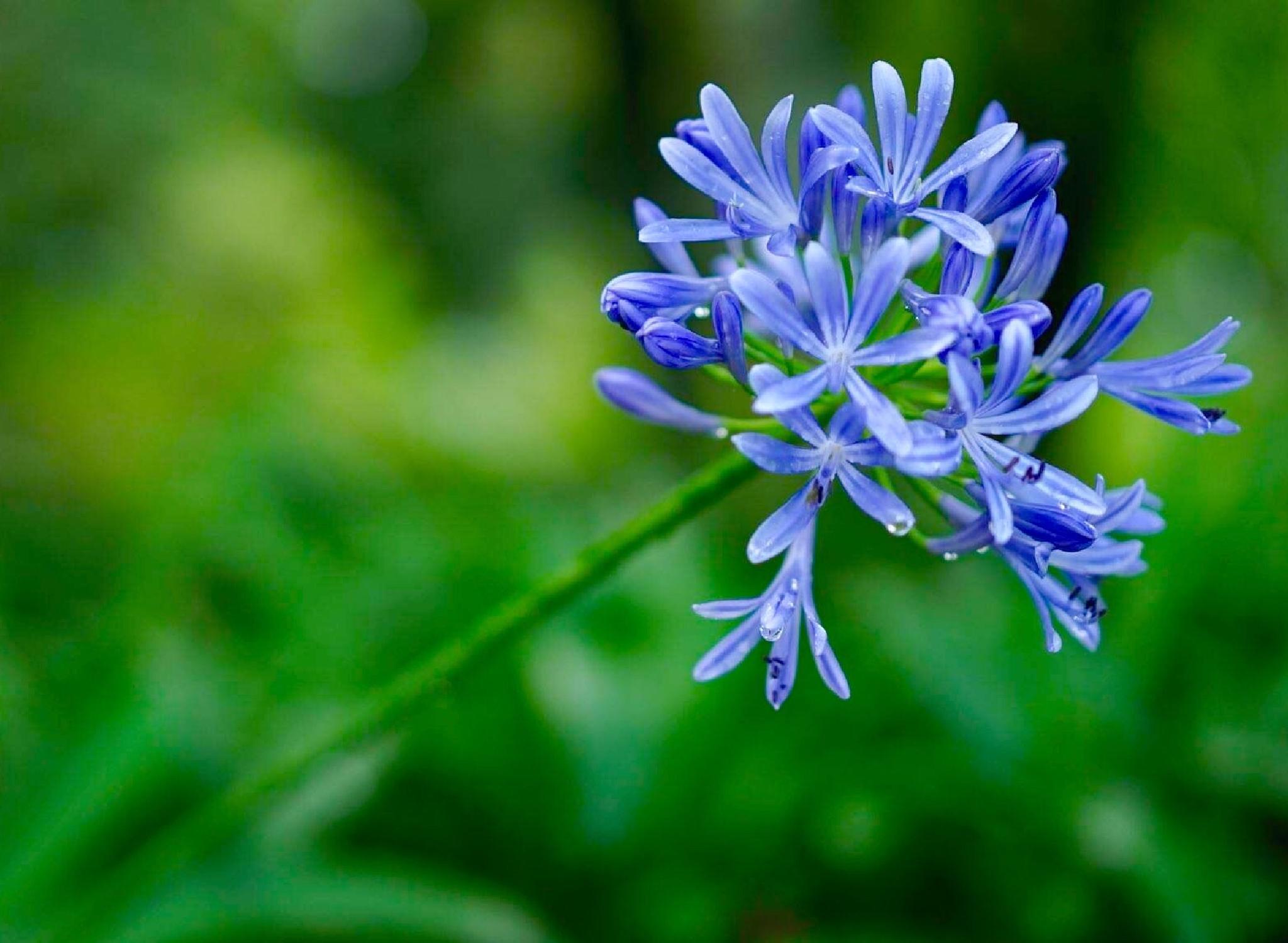 Blue Blooming by philip.han