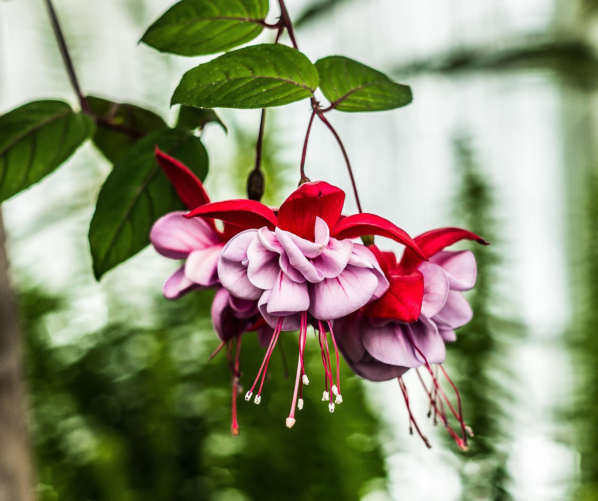 Flower by Stephen C. Benine