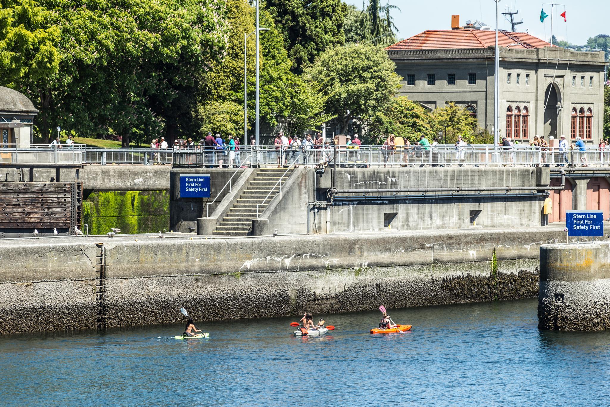 Kayaks going through the Ballard Locks by Stephen C. Benine