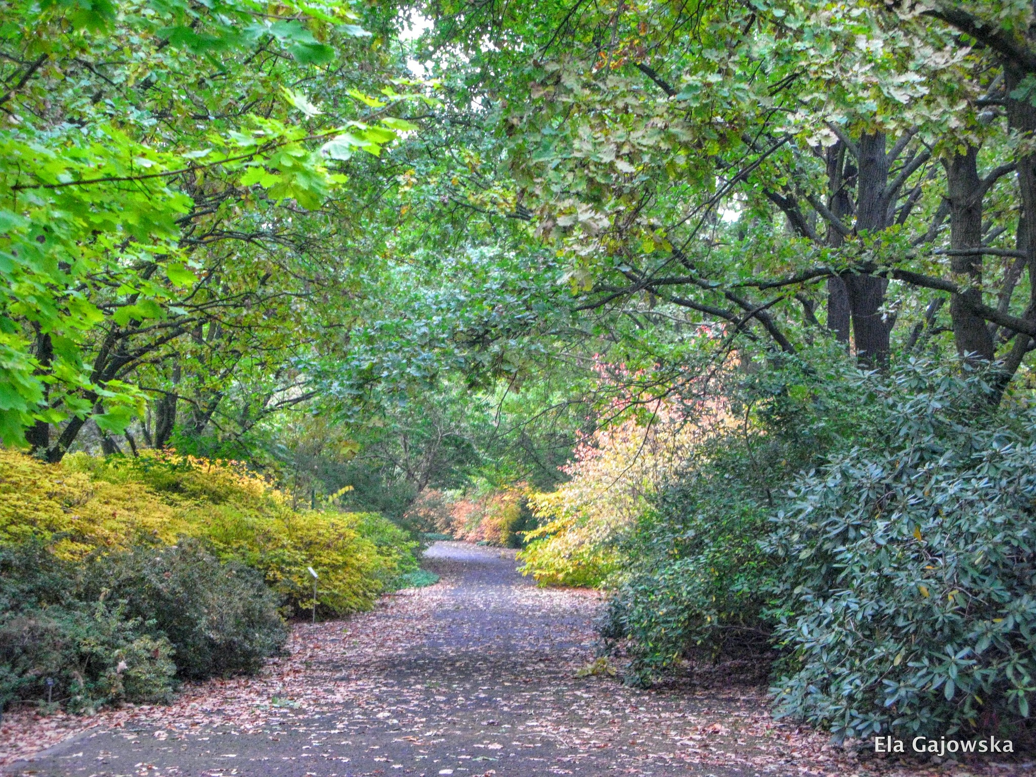 Autumn in the botanic garden by Ela Gajowska