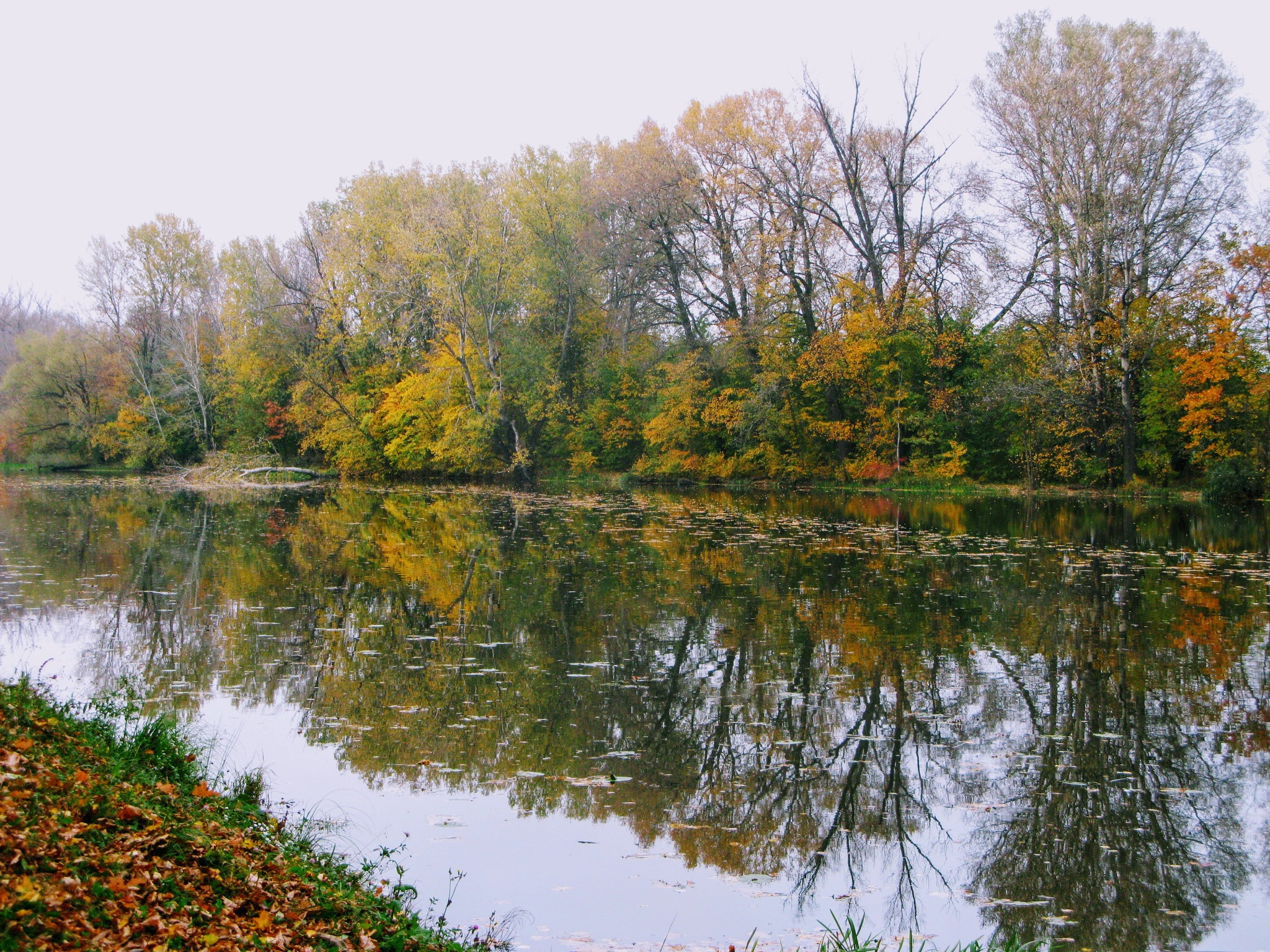 Autumn reflections by Ela Gajowska