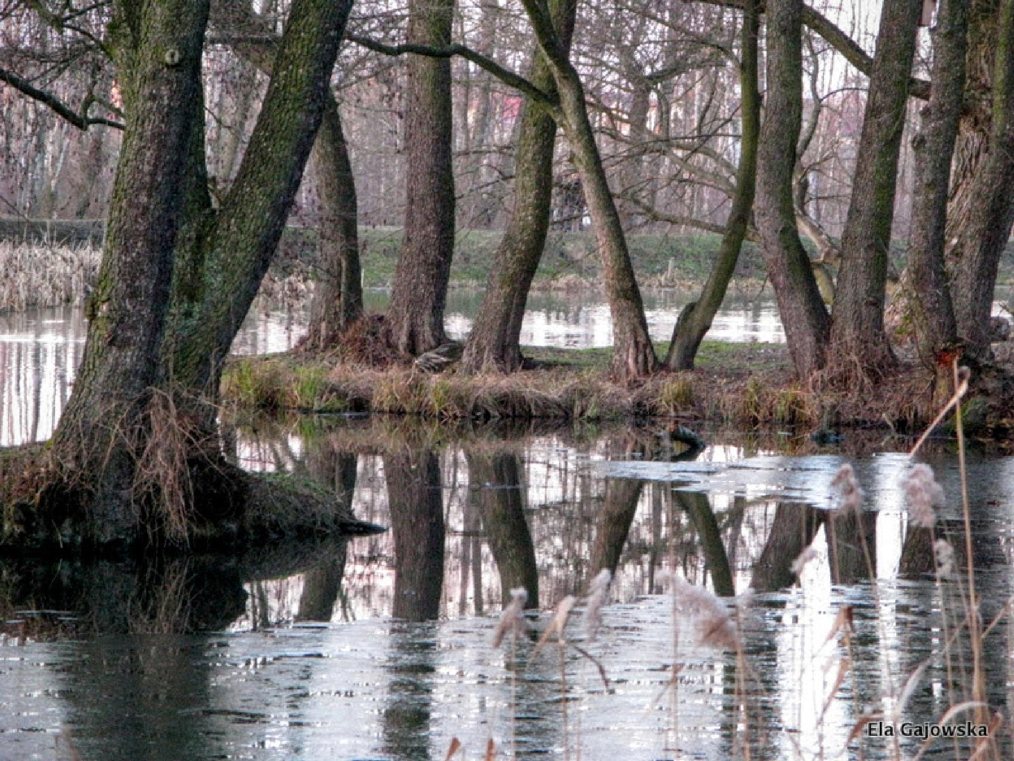 Reflection in icy water 2 by Ela Gajowska