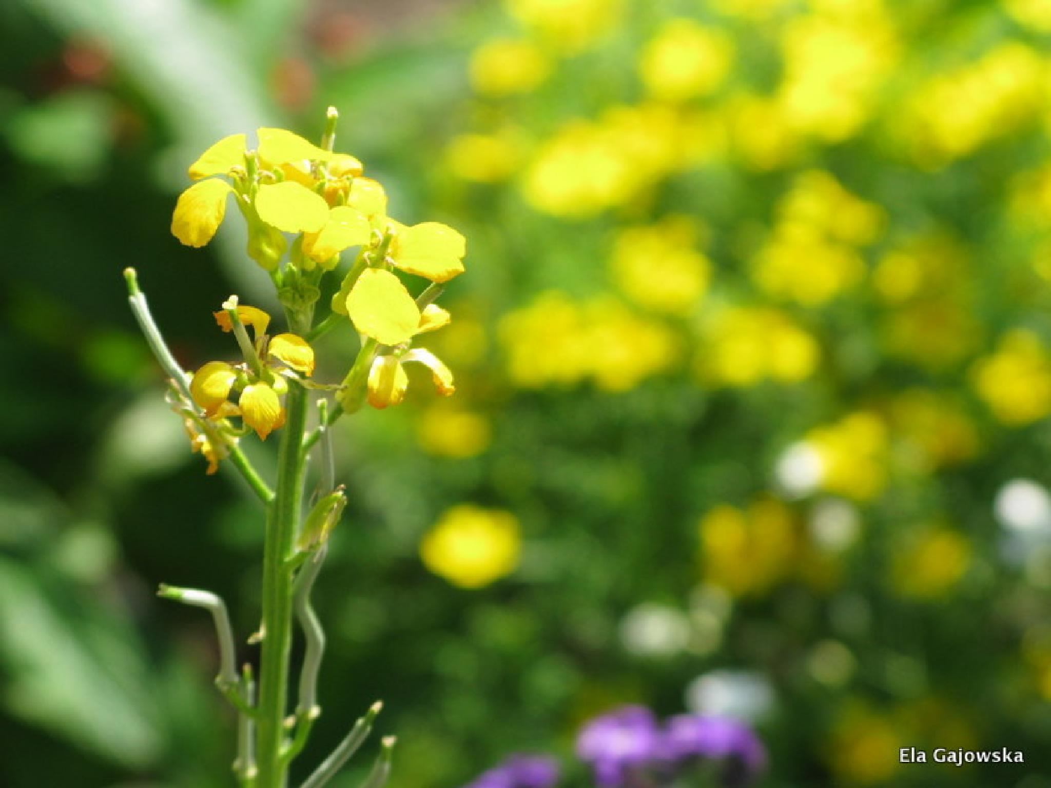Yellow by Ela Gajowska