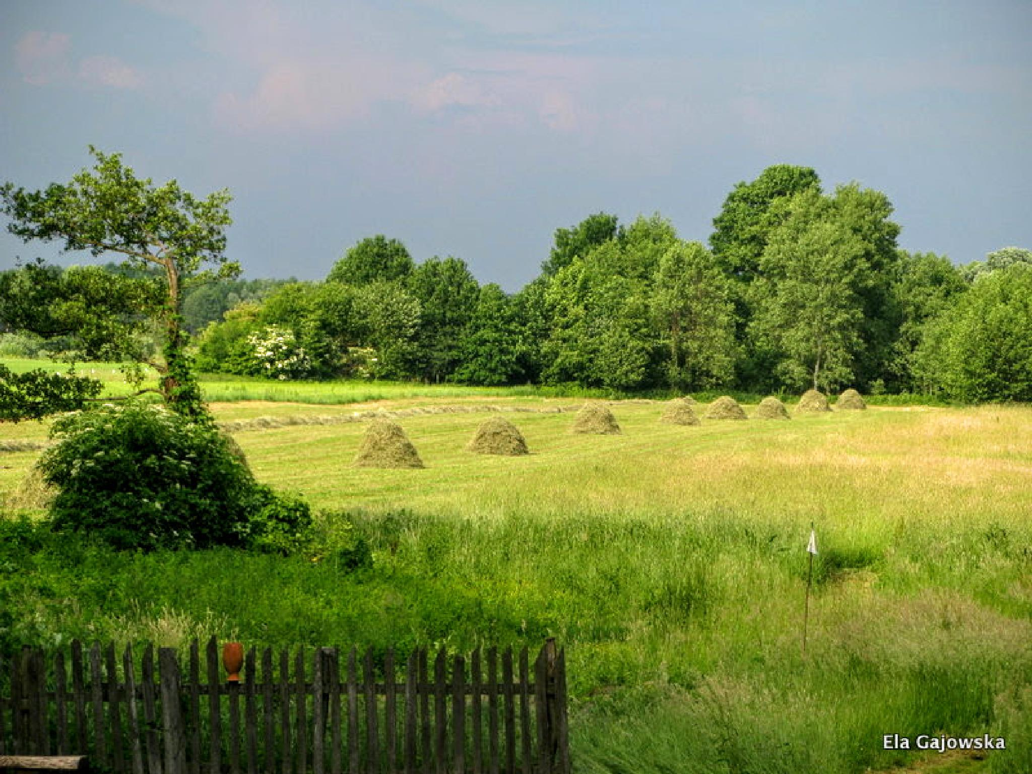 June landscape, Poland by Ela Gajowska