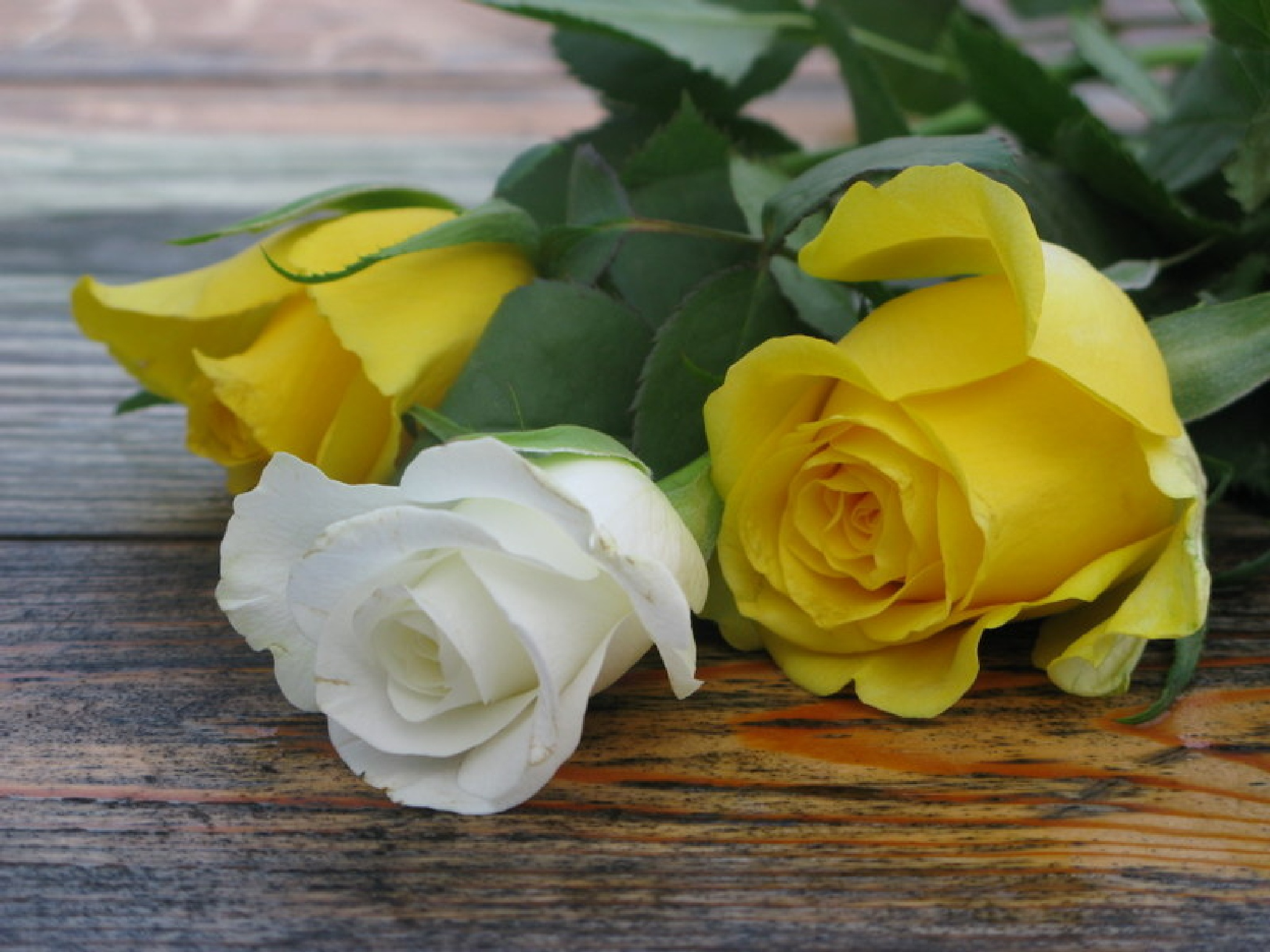 White and yellow by Ela Gajowska