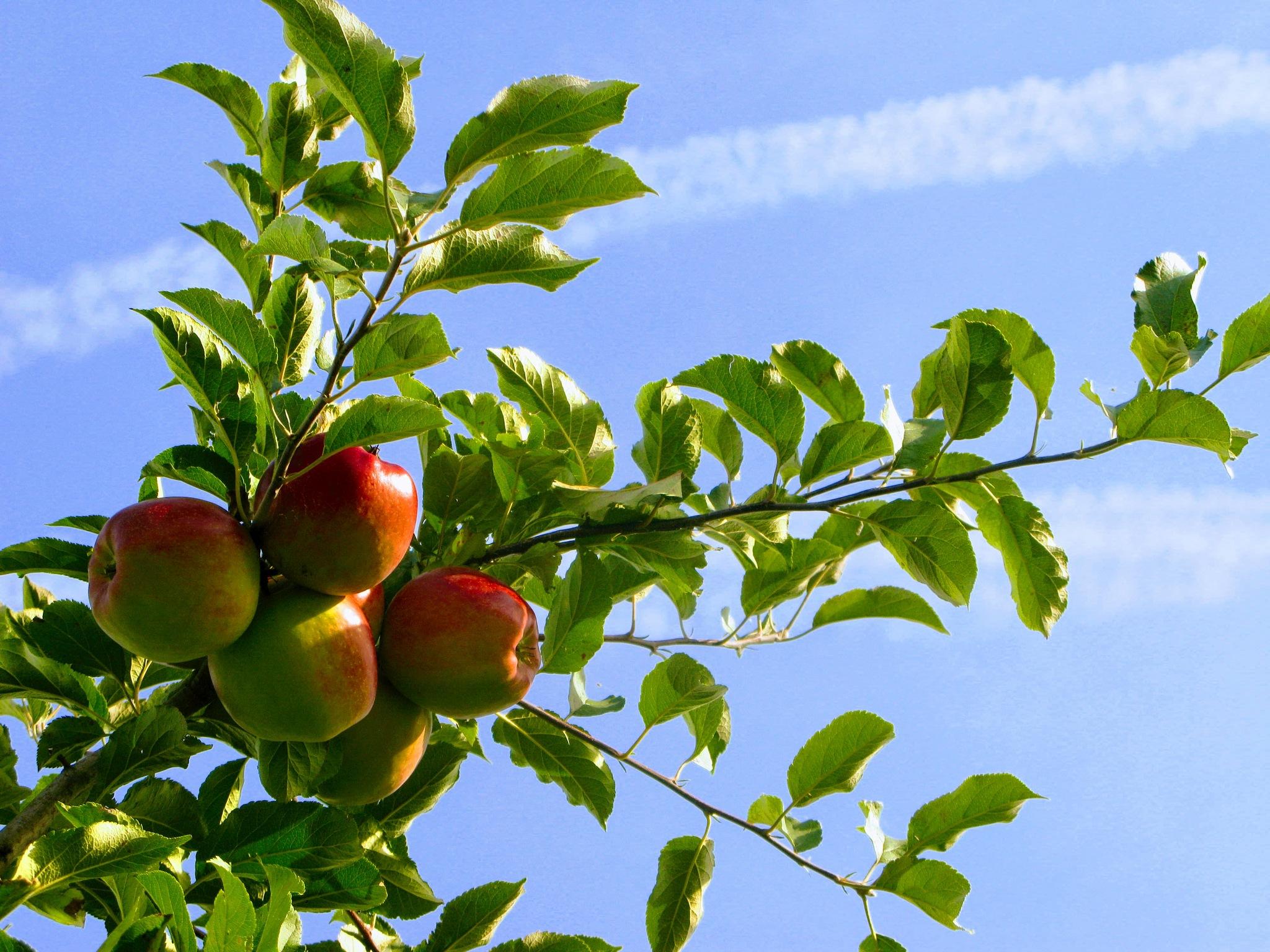 In the orchard by Ela Gajowska