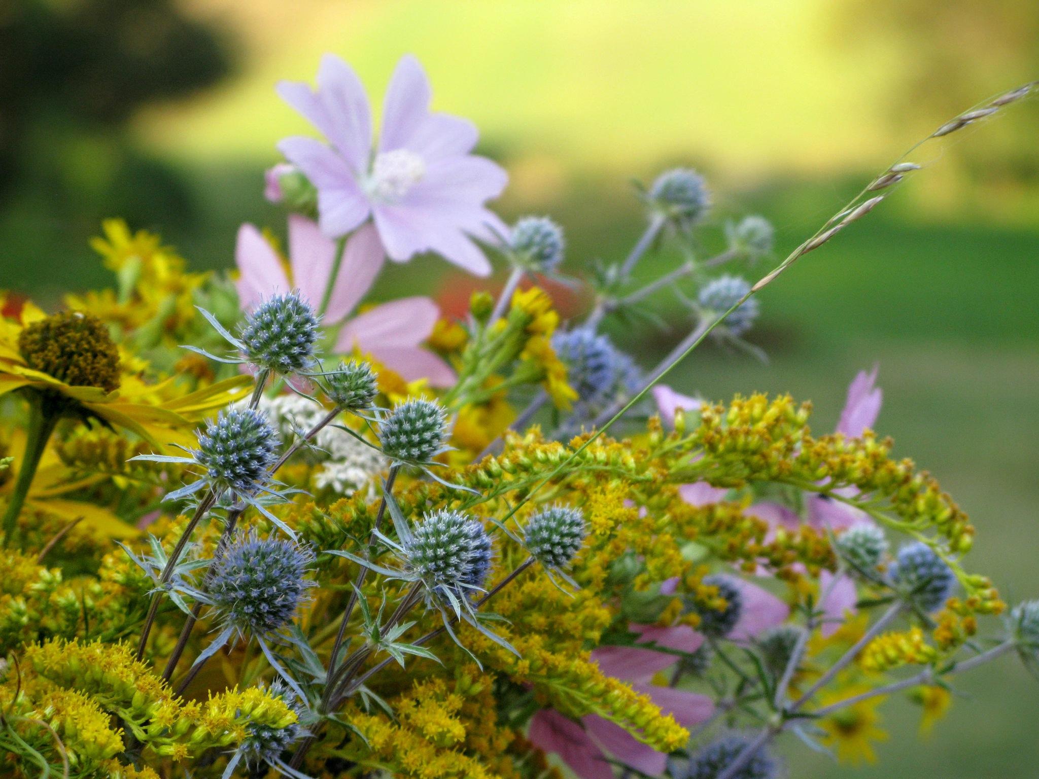 Bunch of wild flowers by Ela Gajowska