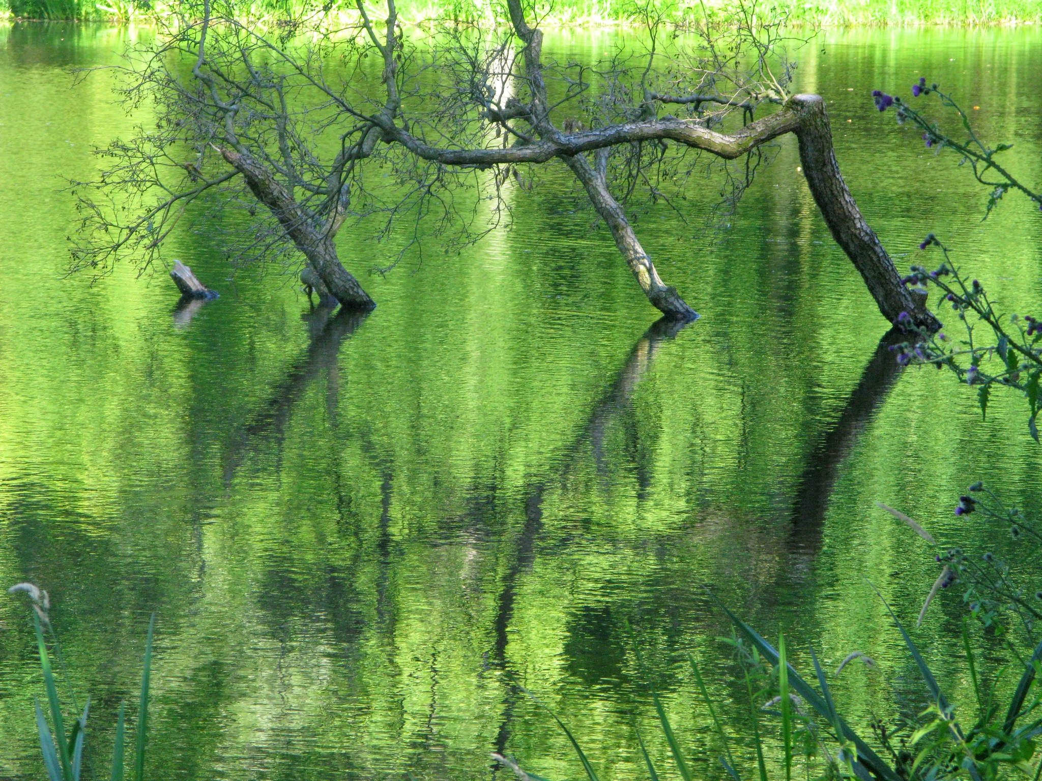 Reflections in green water by Ela Gajowska