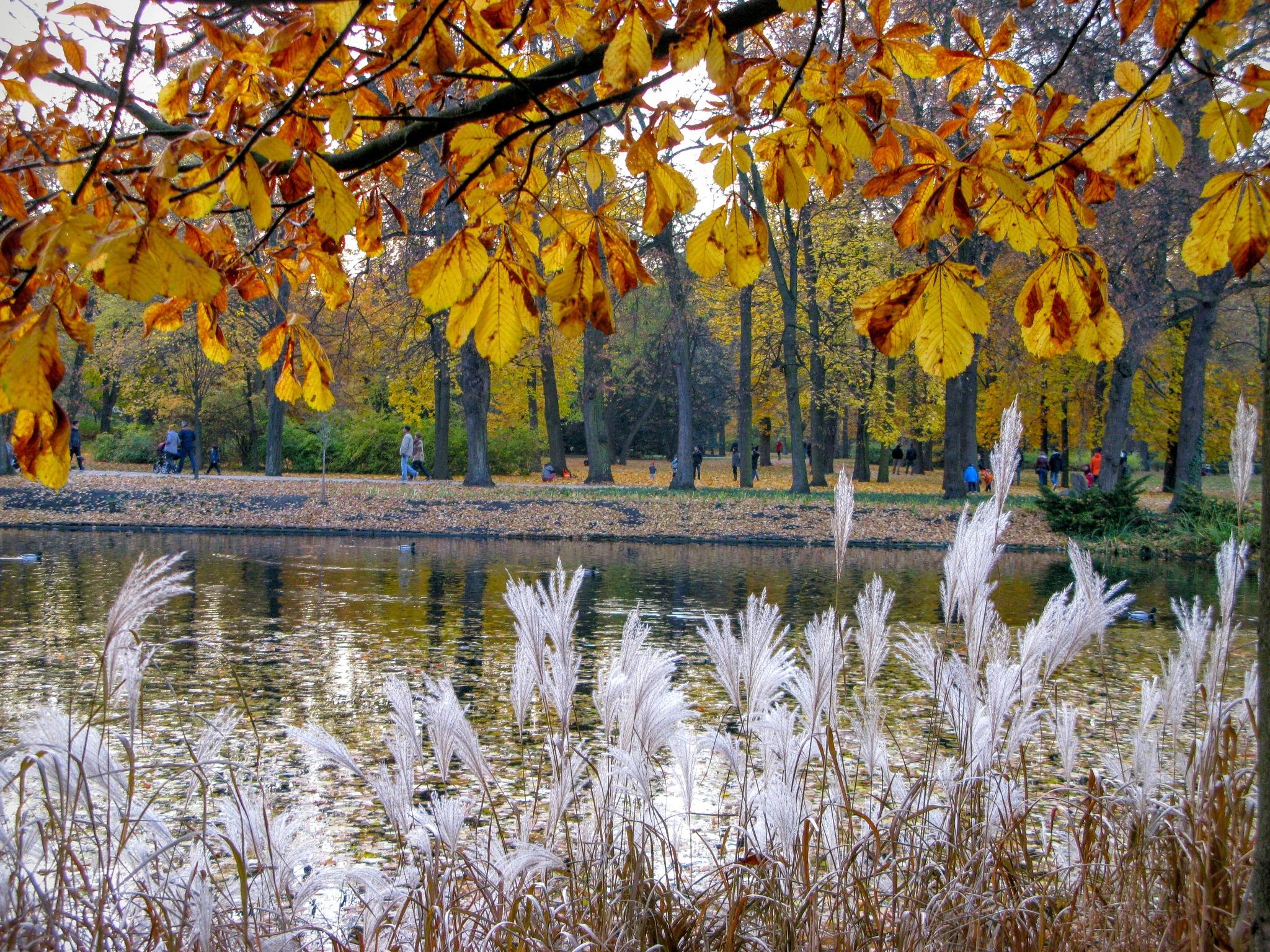Autumn colors by Ela Gajowska
