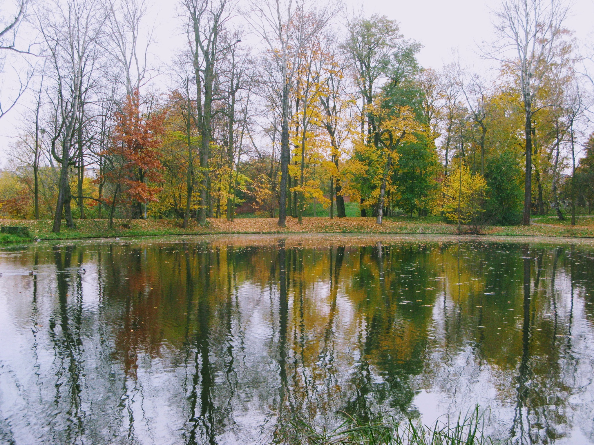 Fall reflections by Ela Gajowska