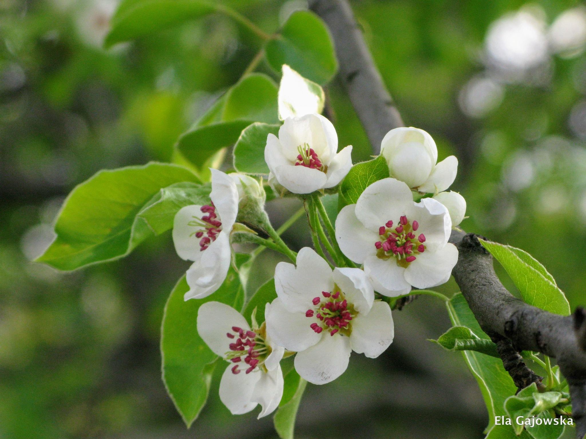 Enjoying spring beauty by Ela Gajowska