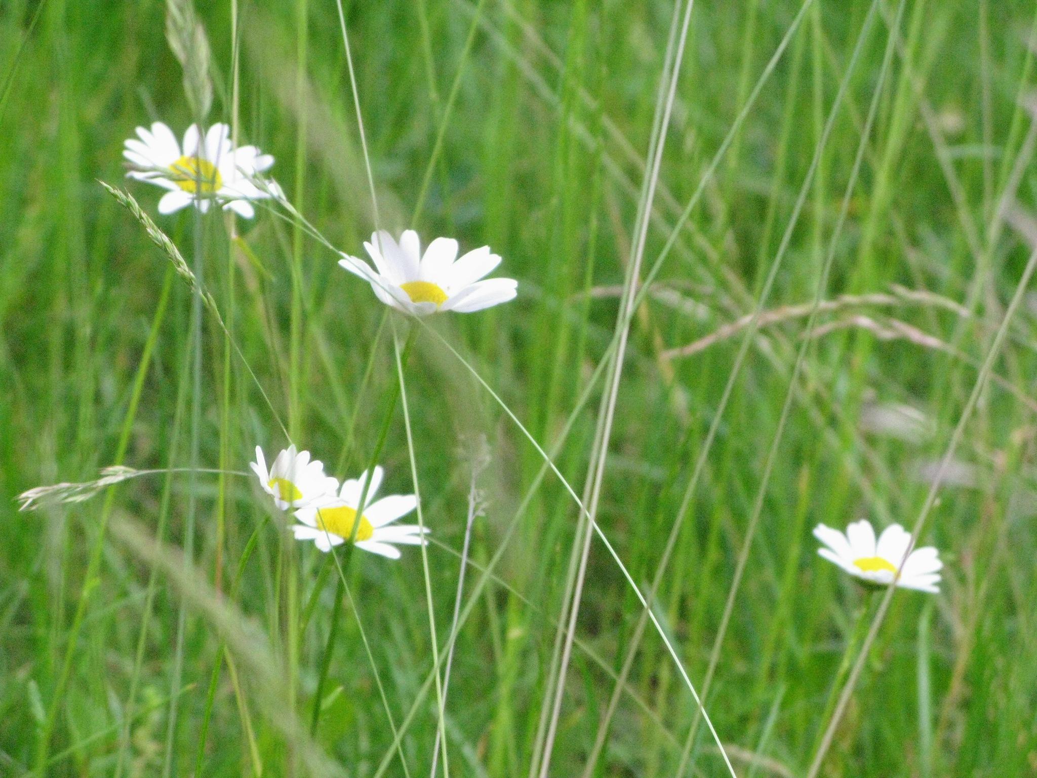 On the meadow 5 by Ela Gajowska