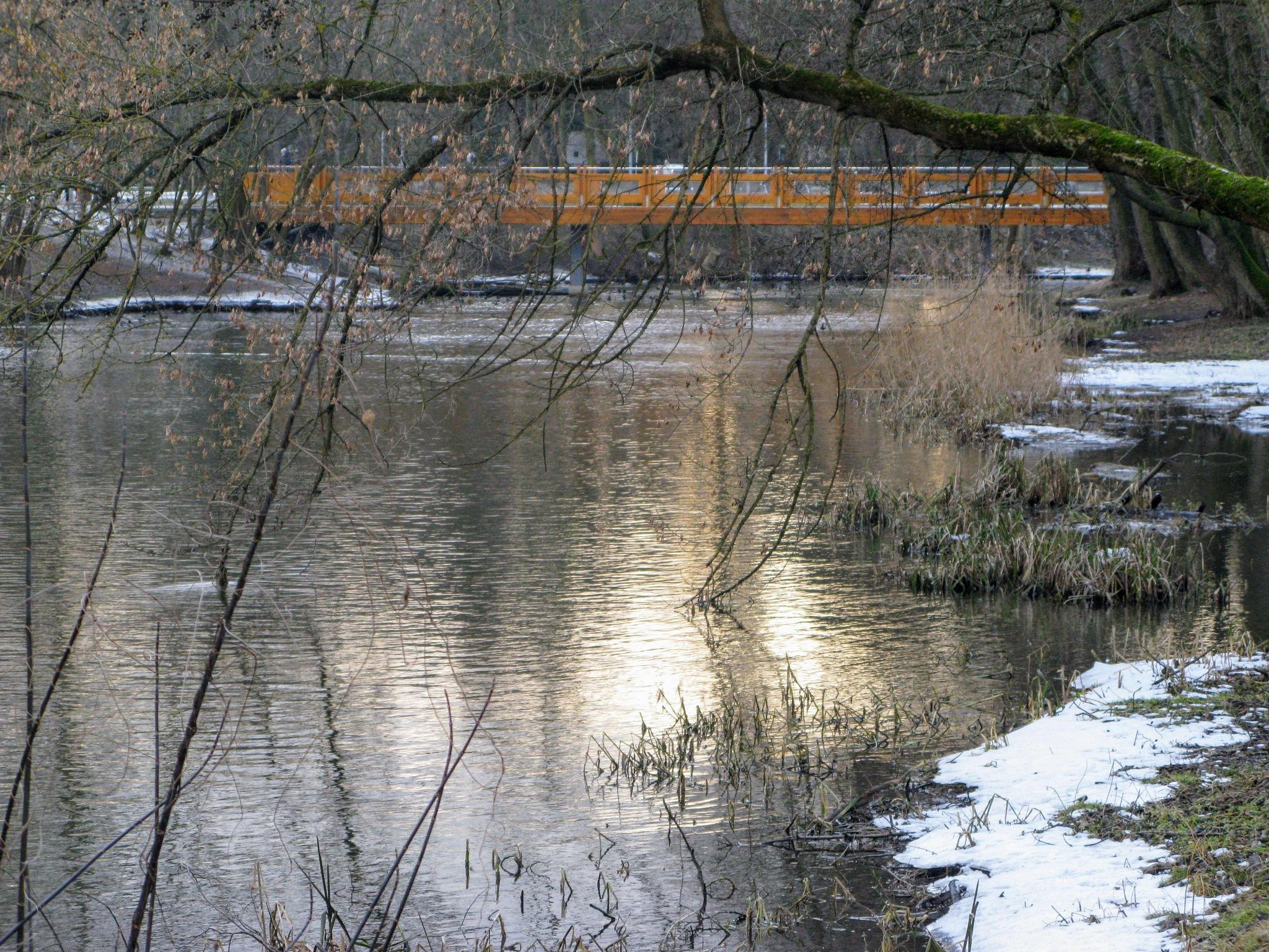 Bridge behind branches by Ela Gajowska