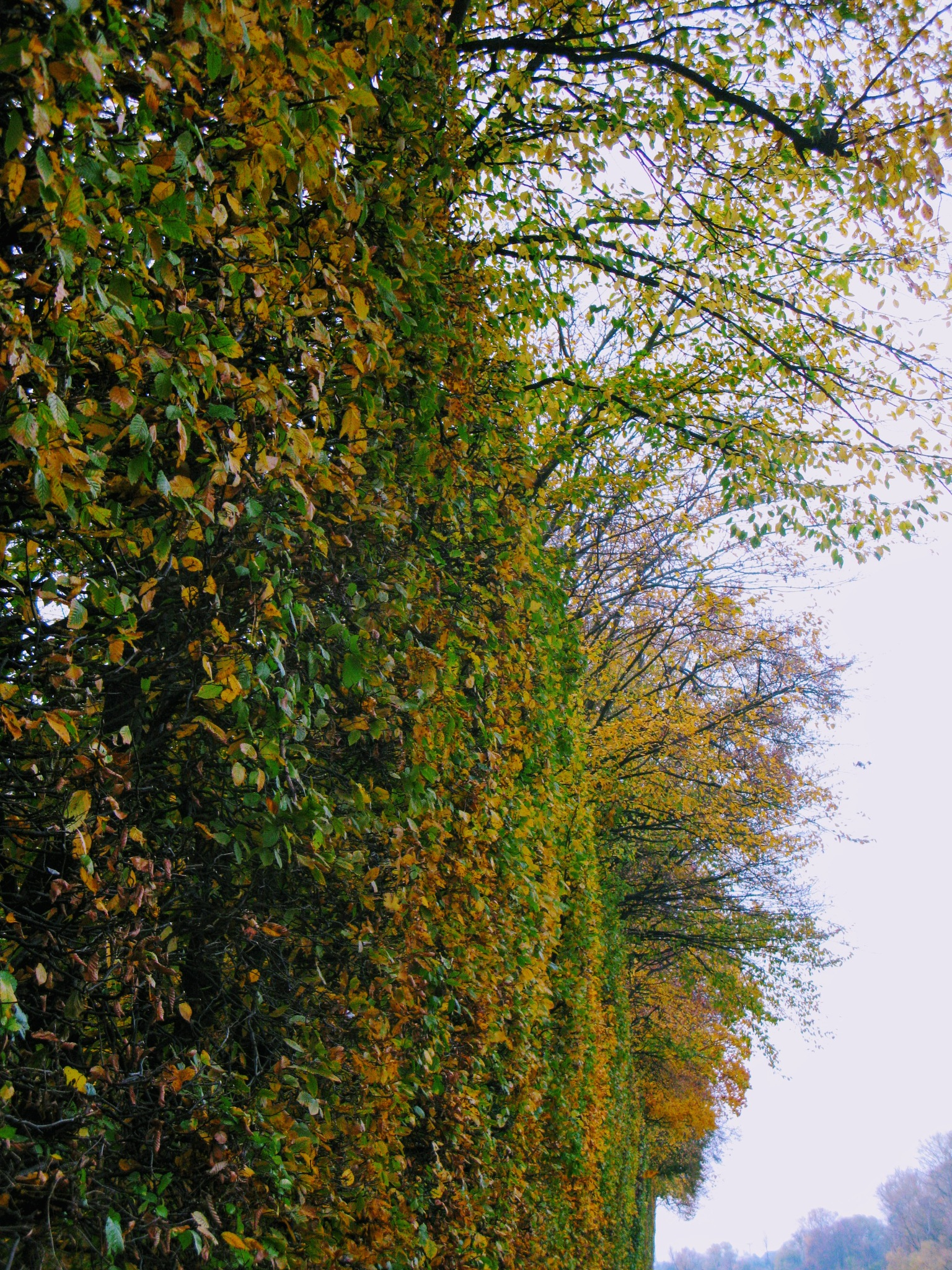 Autumn wall by Ela Gajowska