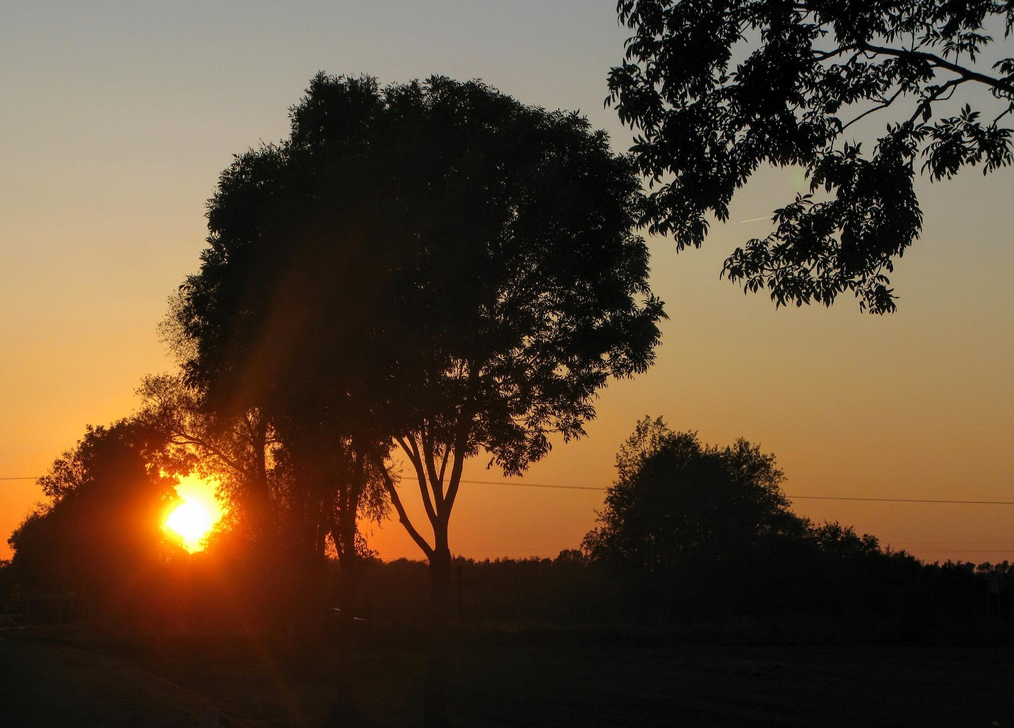 Sunset among trees by Ela Gajowska