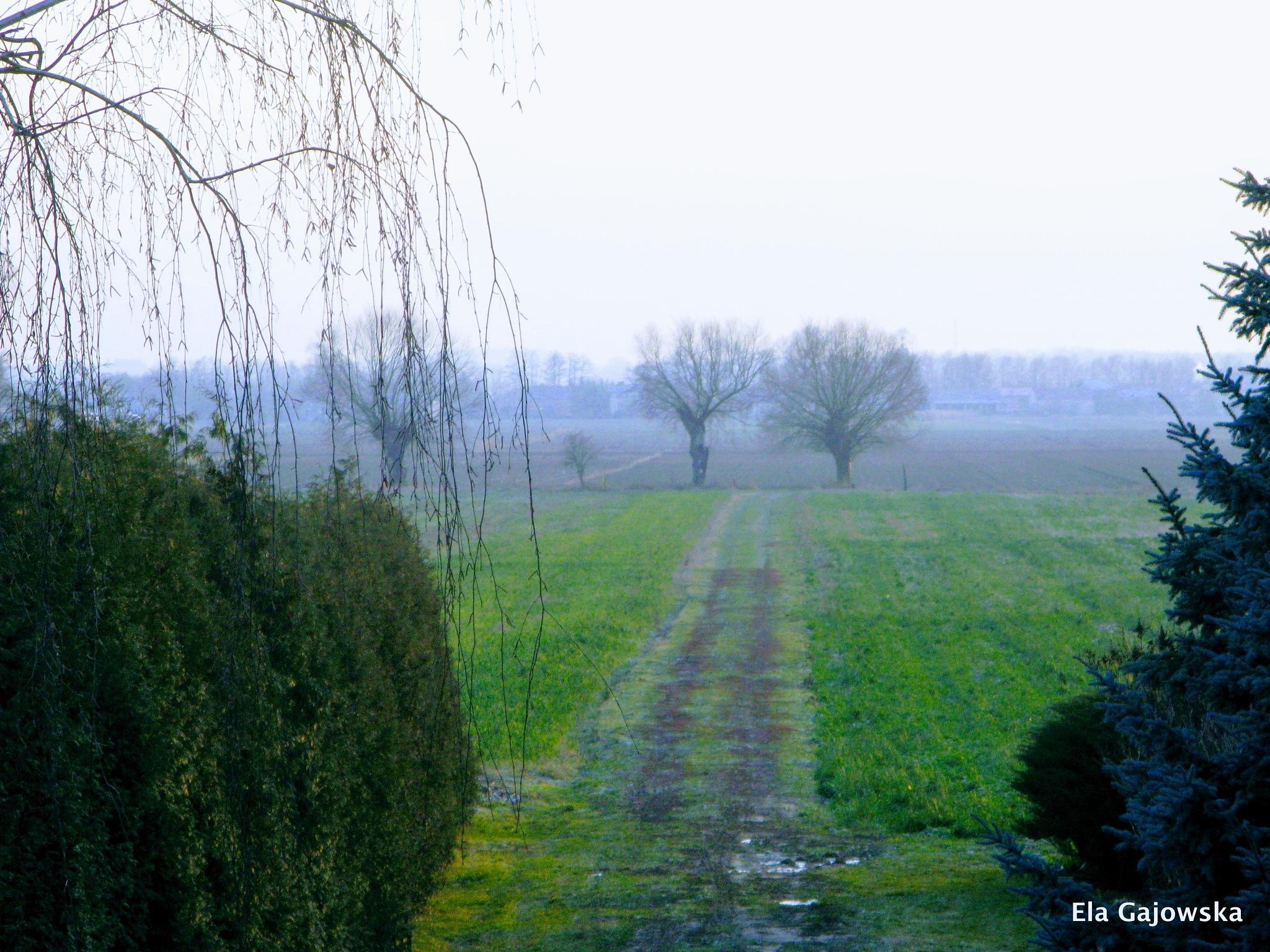 Countryside in December by Ela Gajowska