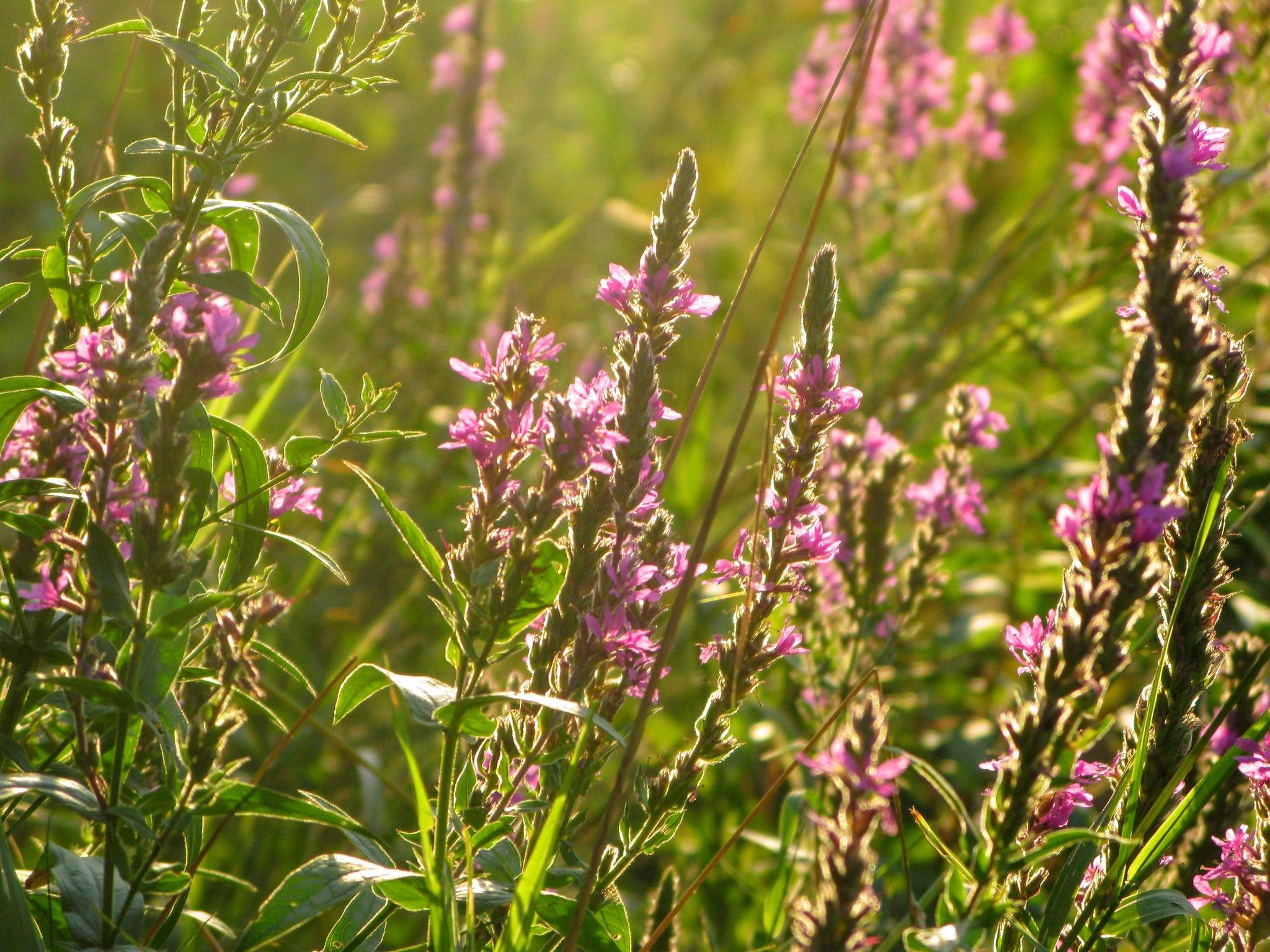 On the meadow 4 by Ela Gajowska