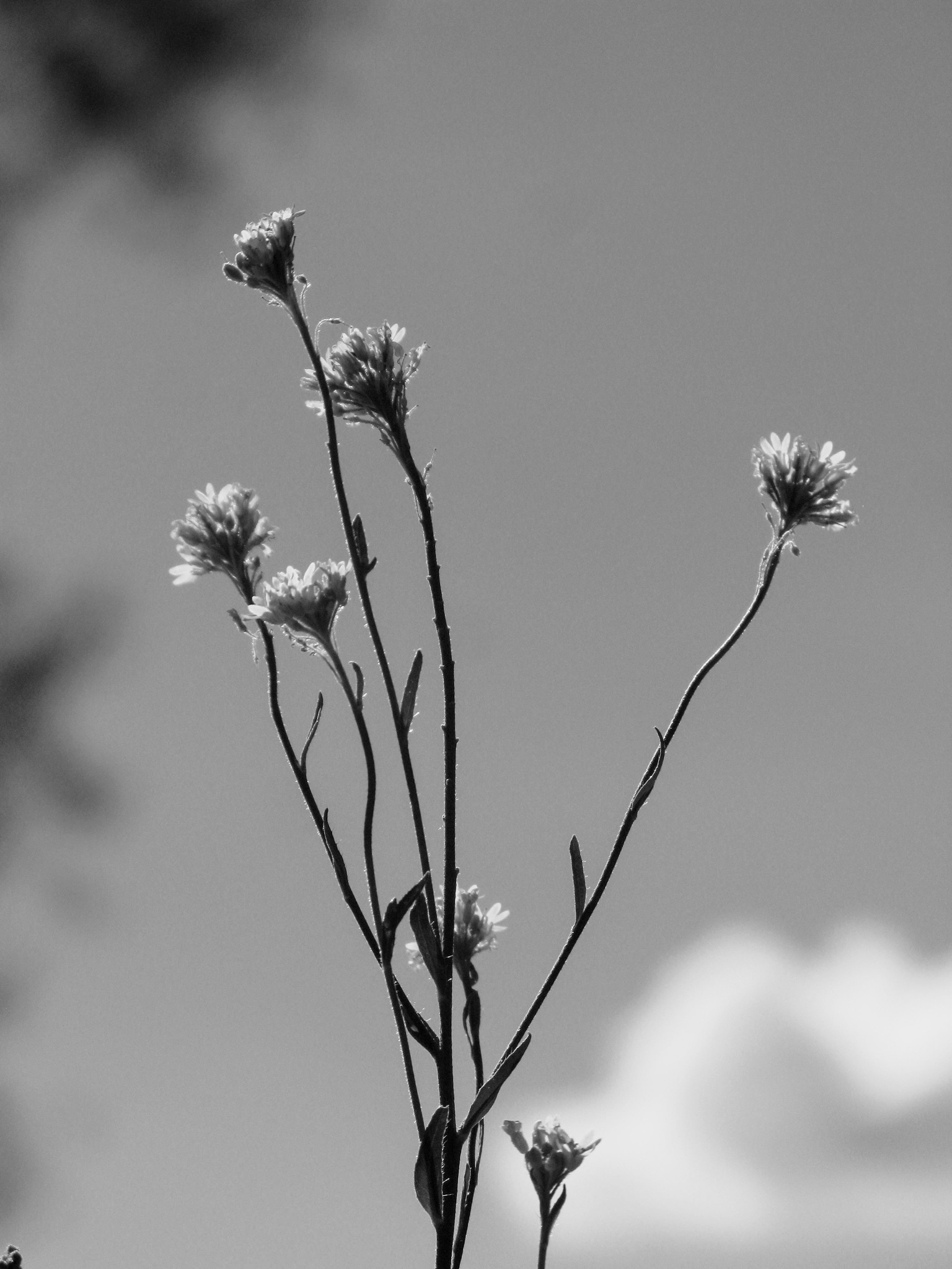 Simplicity by Ela Gajowska