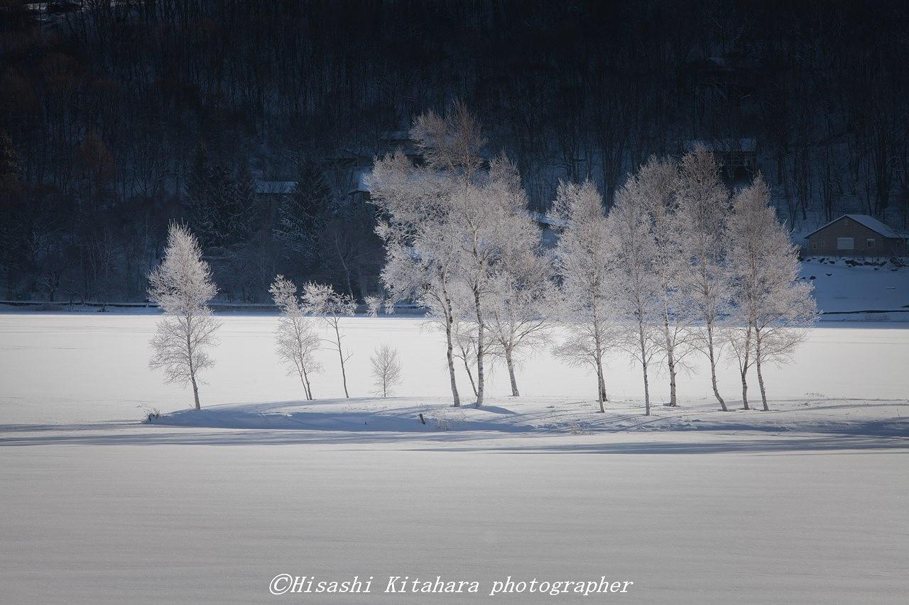 Winter birch by Hisashi Kitahara