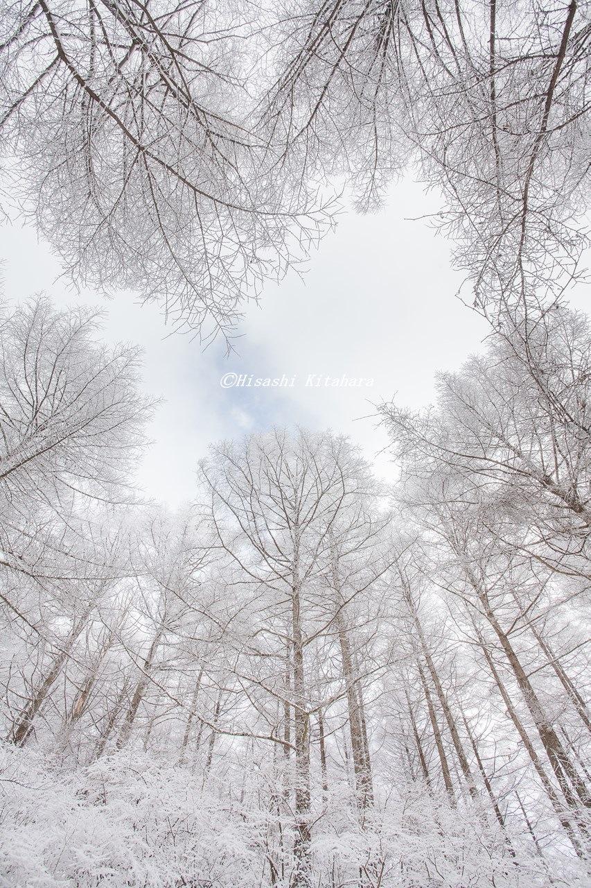 Silver frost by Hisashi Kitahara