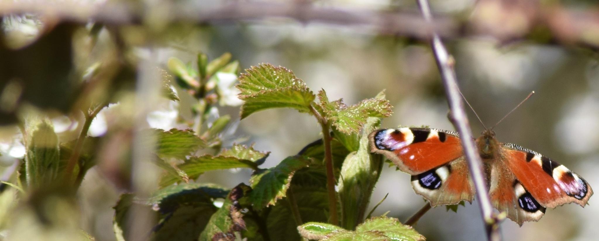 butterfly  by colin arnott