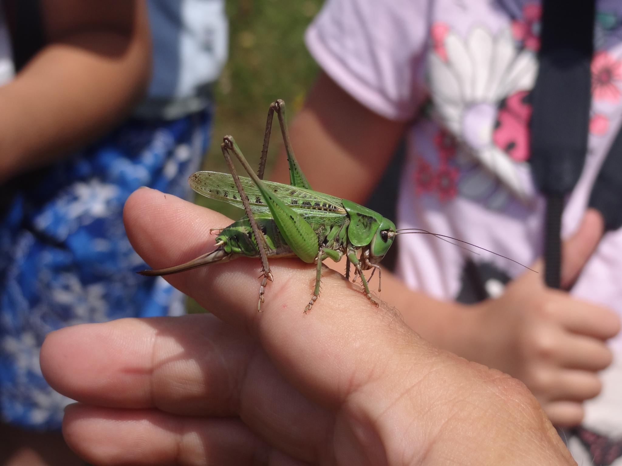 Grasssssshopper by nejc.rabuza