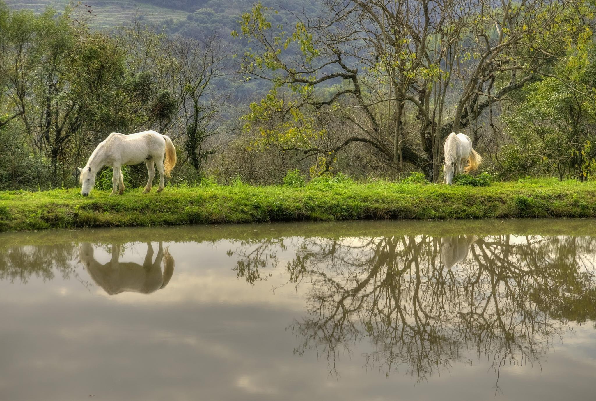 Horses by WSimone