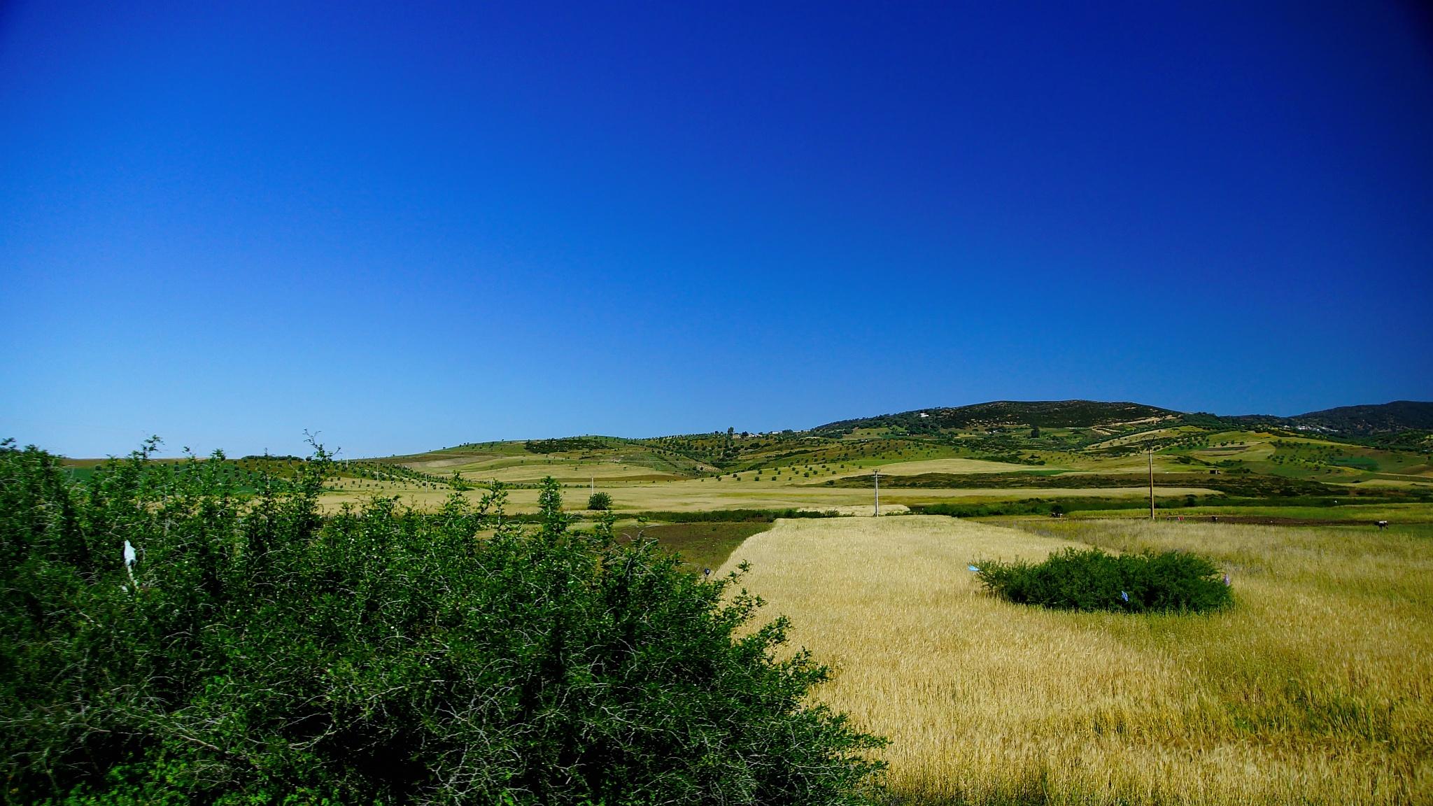 Field by WSimone