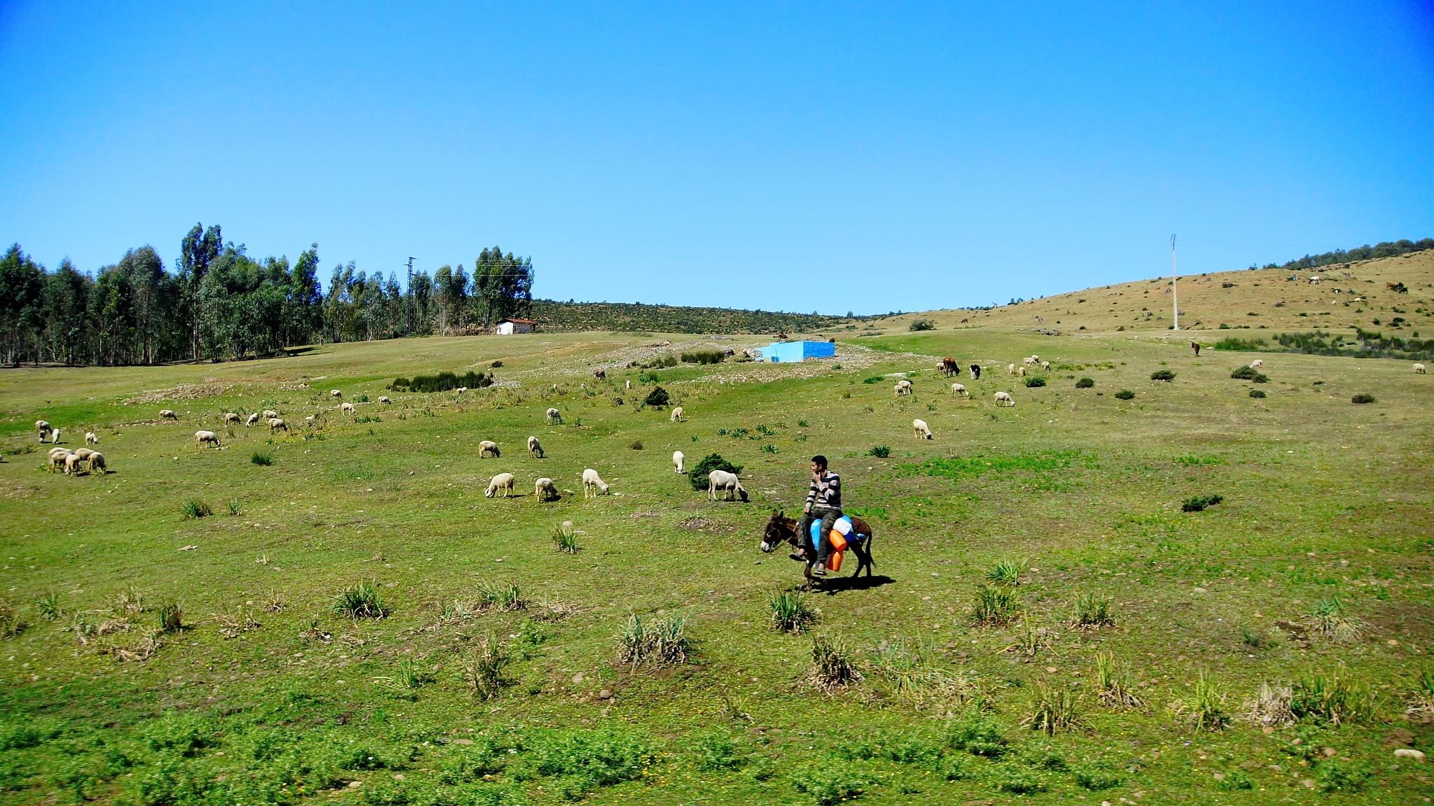 Herdsman by WSimone