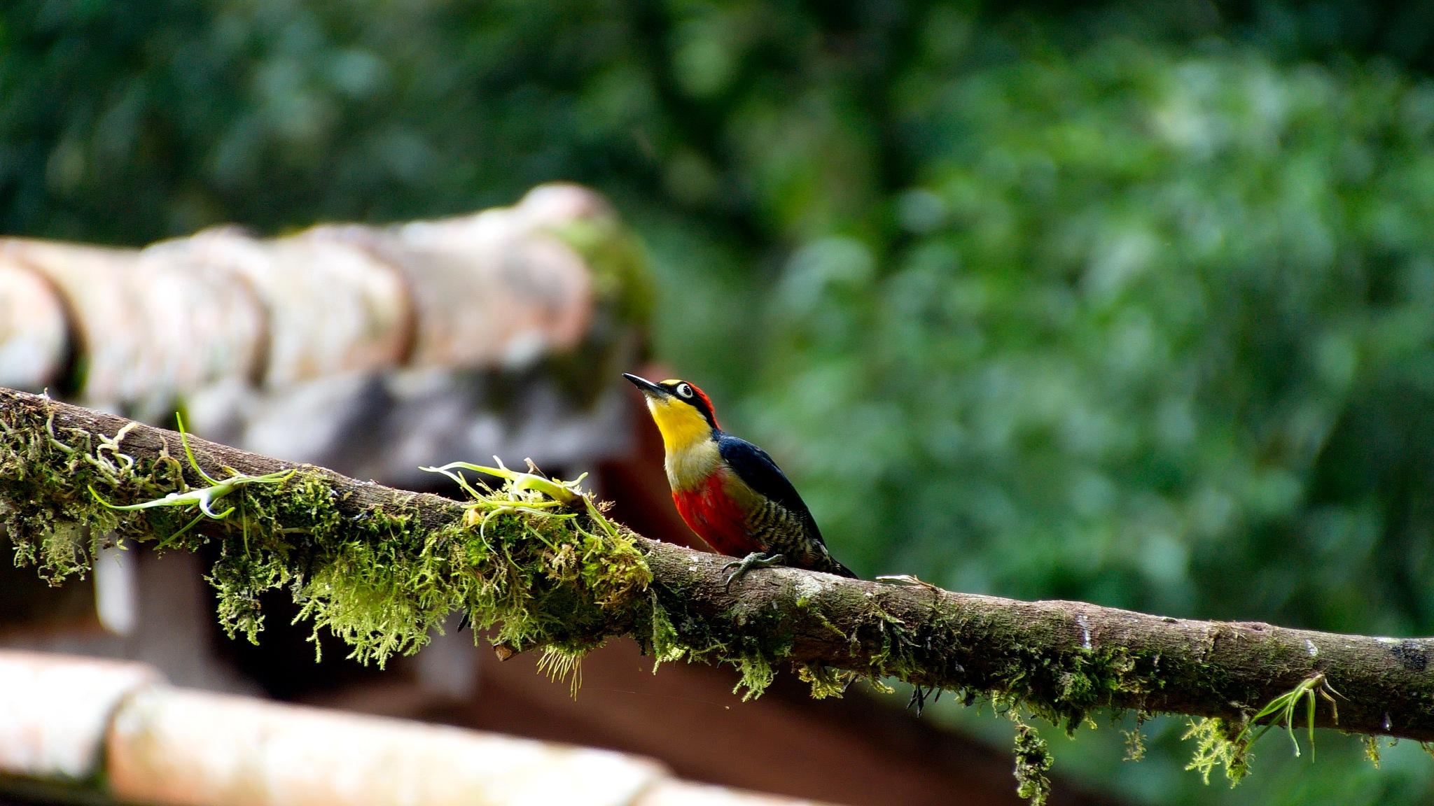 Bird by WSimone