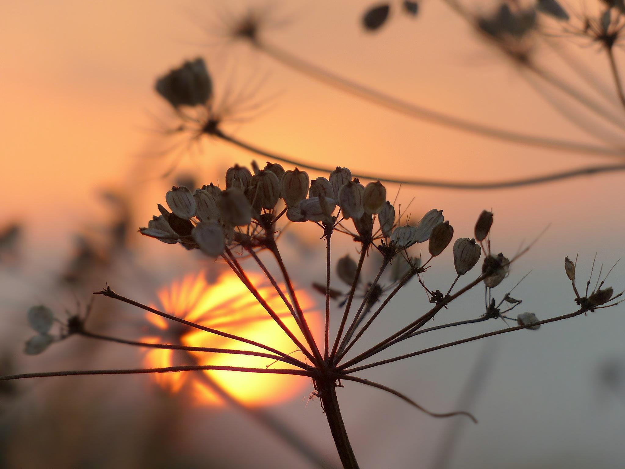 In the setting sun by kaskap444