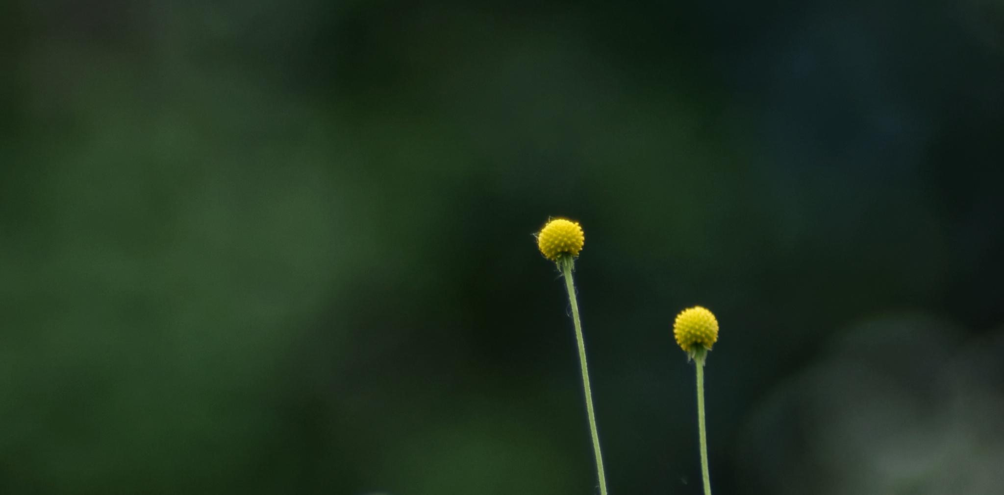 Deep green by Cristian Araya