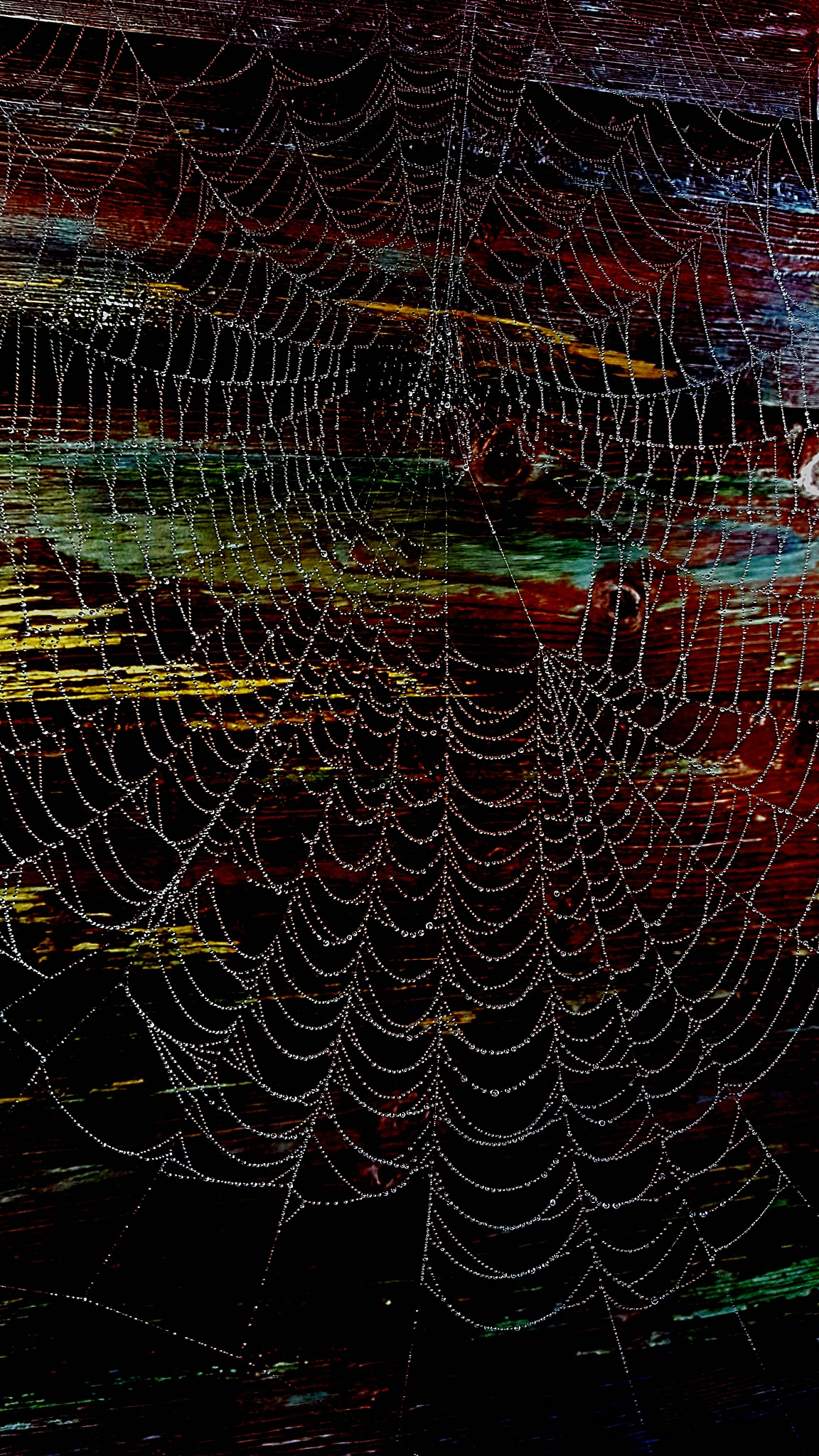 Spider web (Edited from my phone) by ♥ Christina Dixon ♥