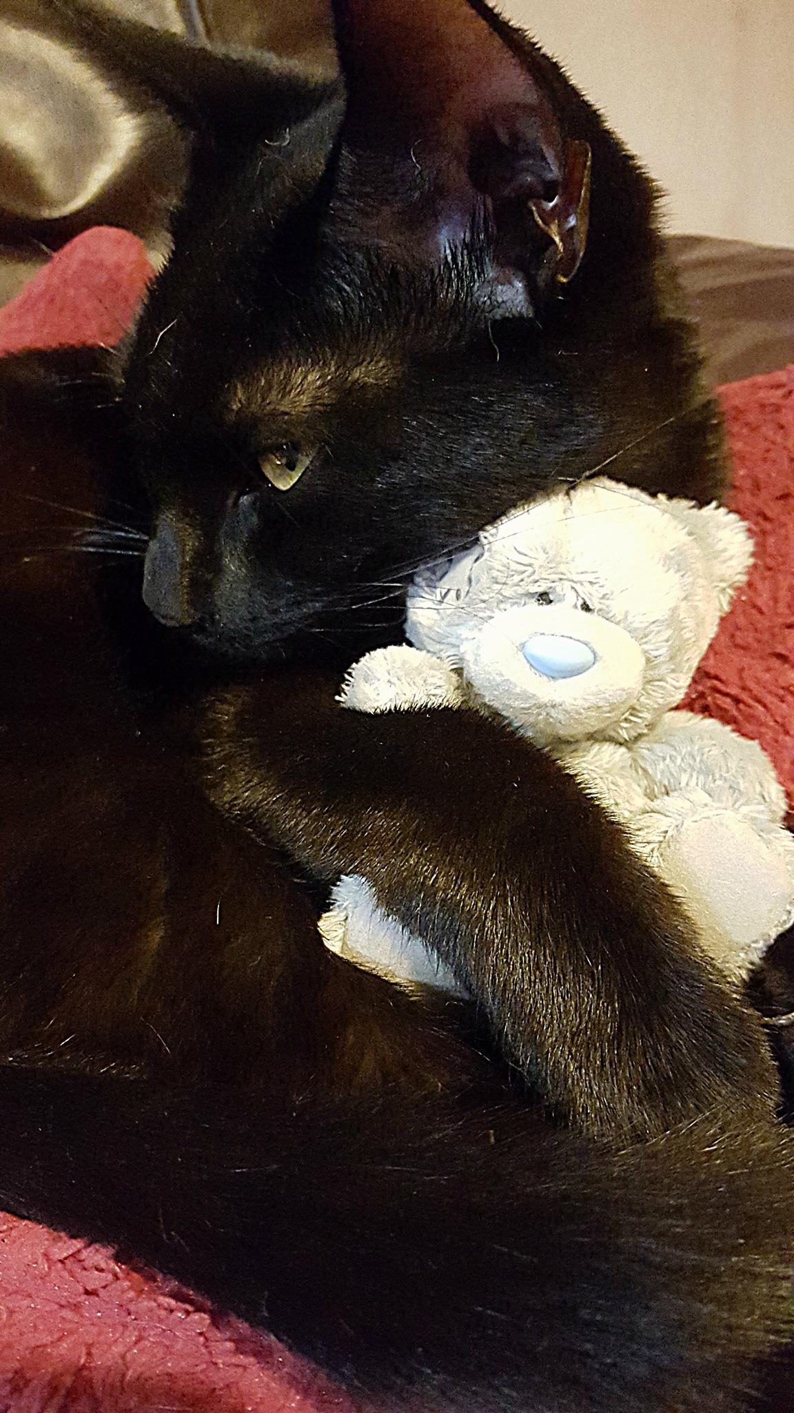 I love my Teddy Bear by ♥ Christina Dixon ♥