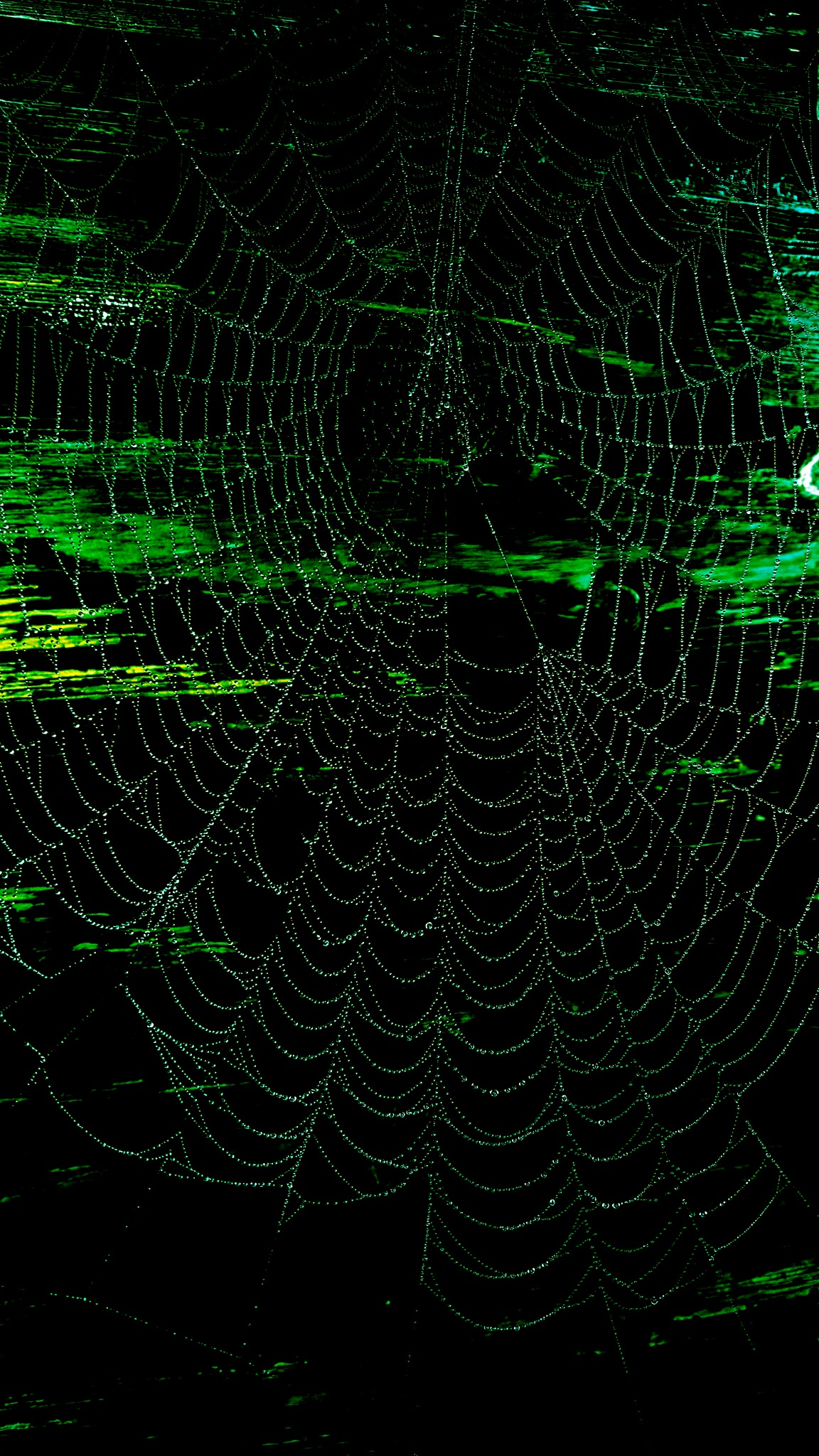 Spooky Spider Web by ♥ Christina Dixon ♥