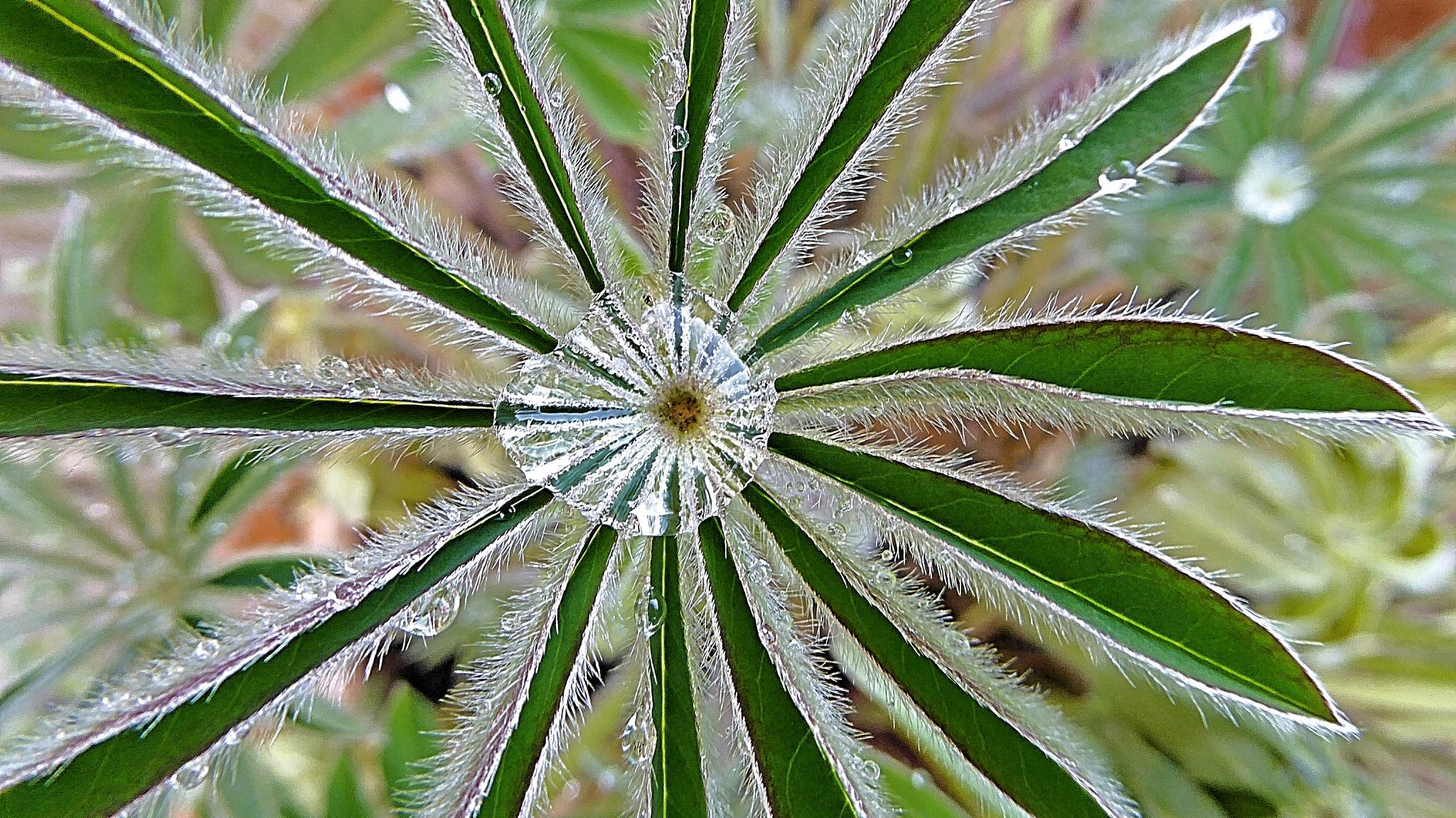 rain droplet  by Anita Collinson