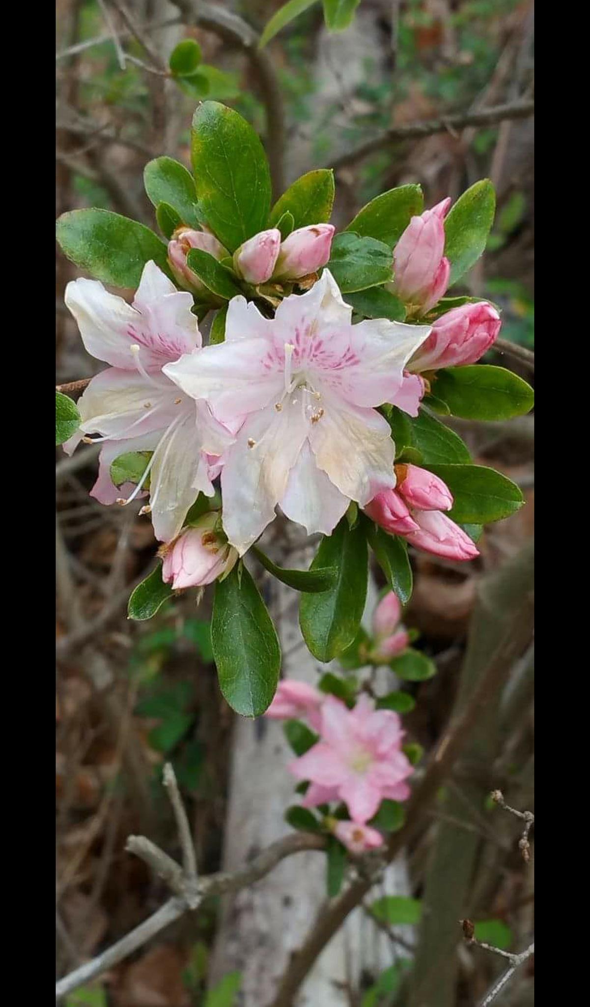 In Bloom by rso1958