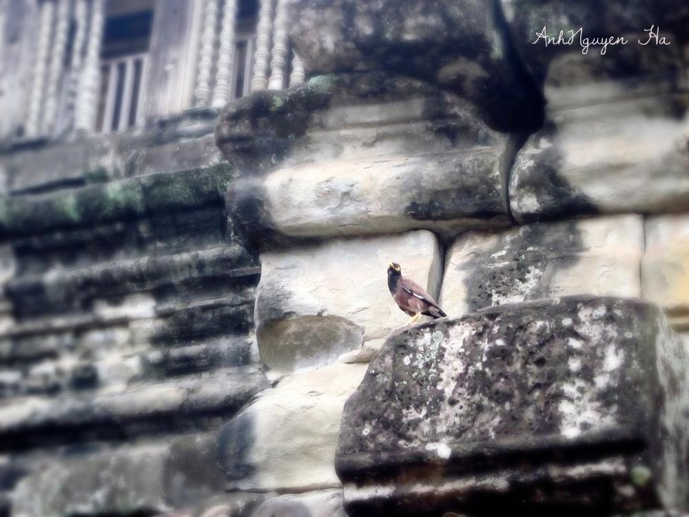 Photo in Journalism #angkor watt #temple #echo